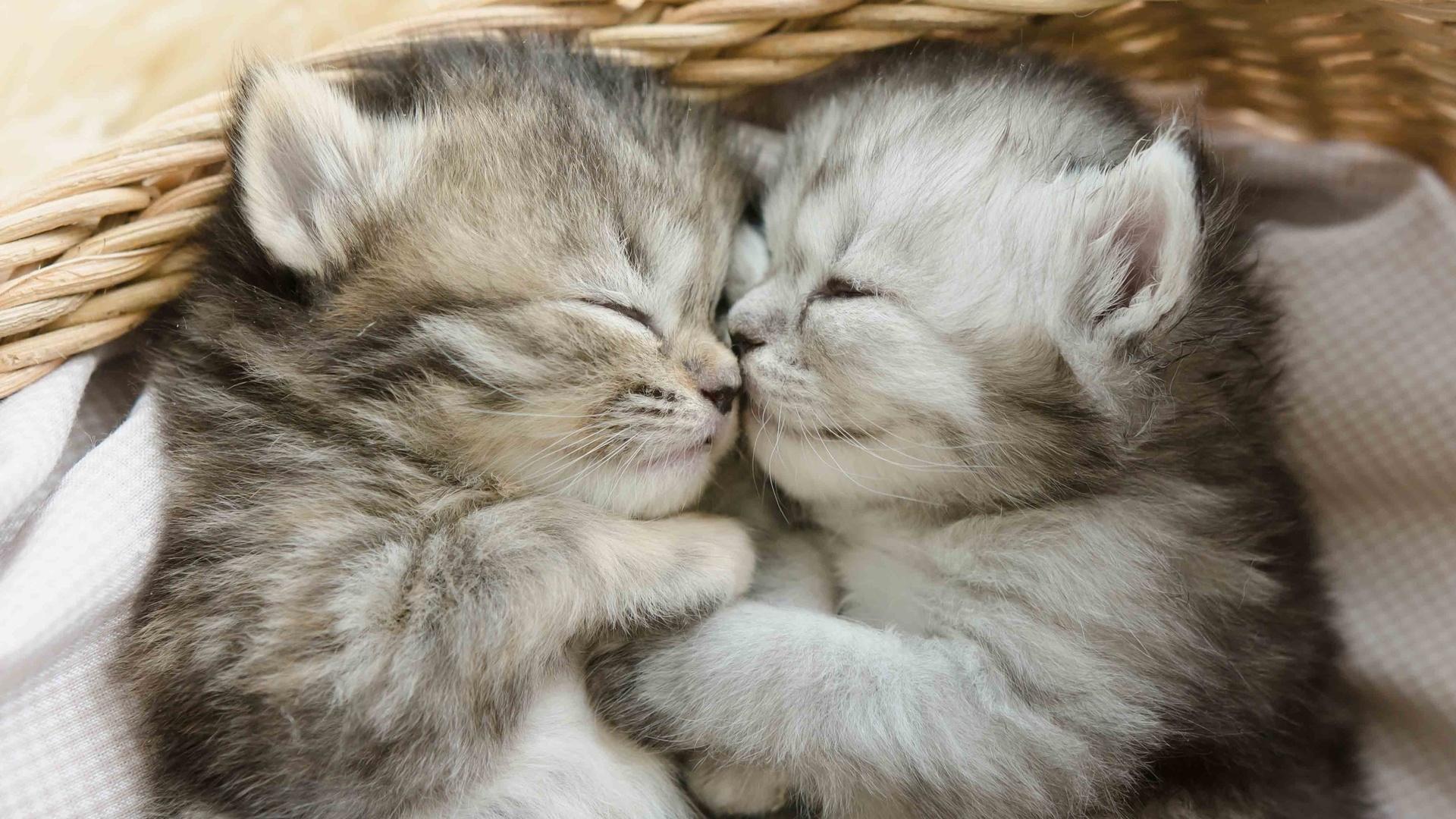 милые картинки обнимашки котиков скажу, летом