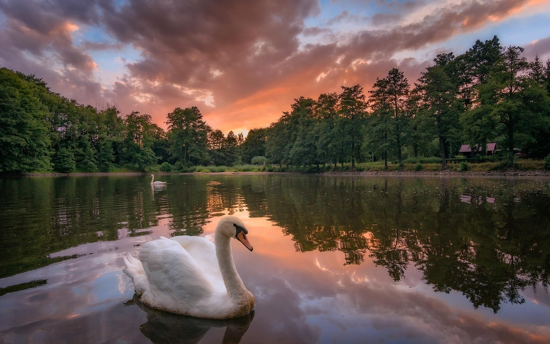 Картинки о природе и любви