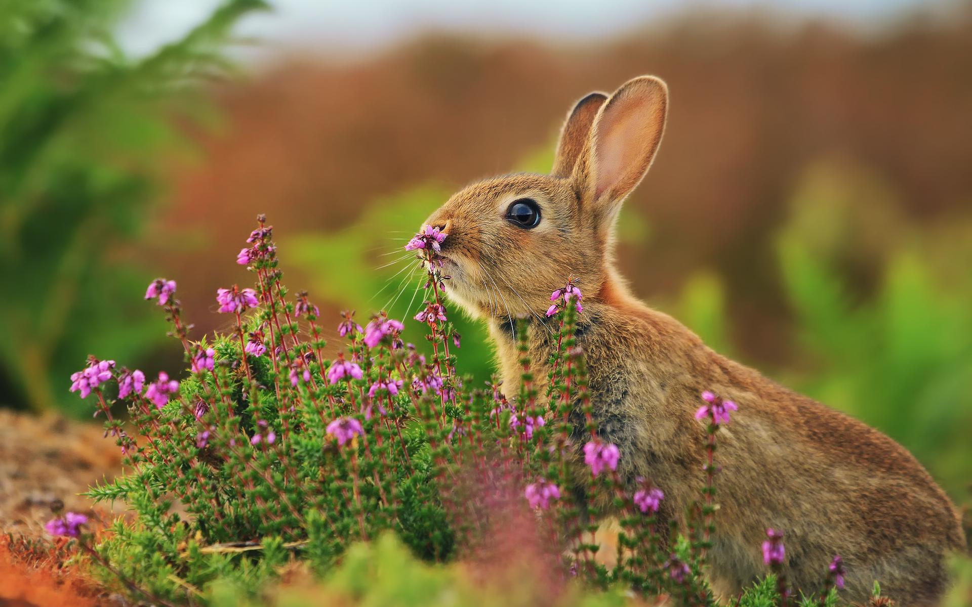 облицовки картинка зайца самая лучшая какой