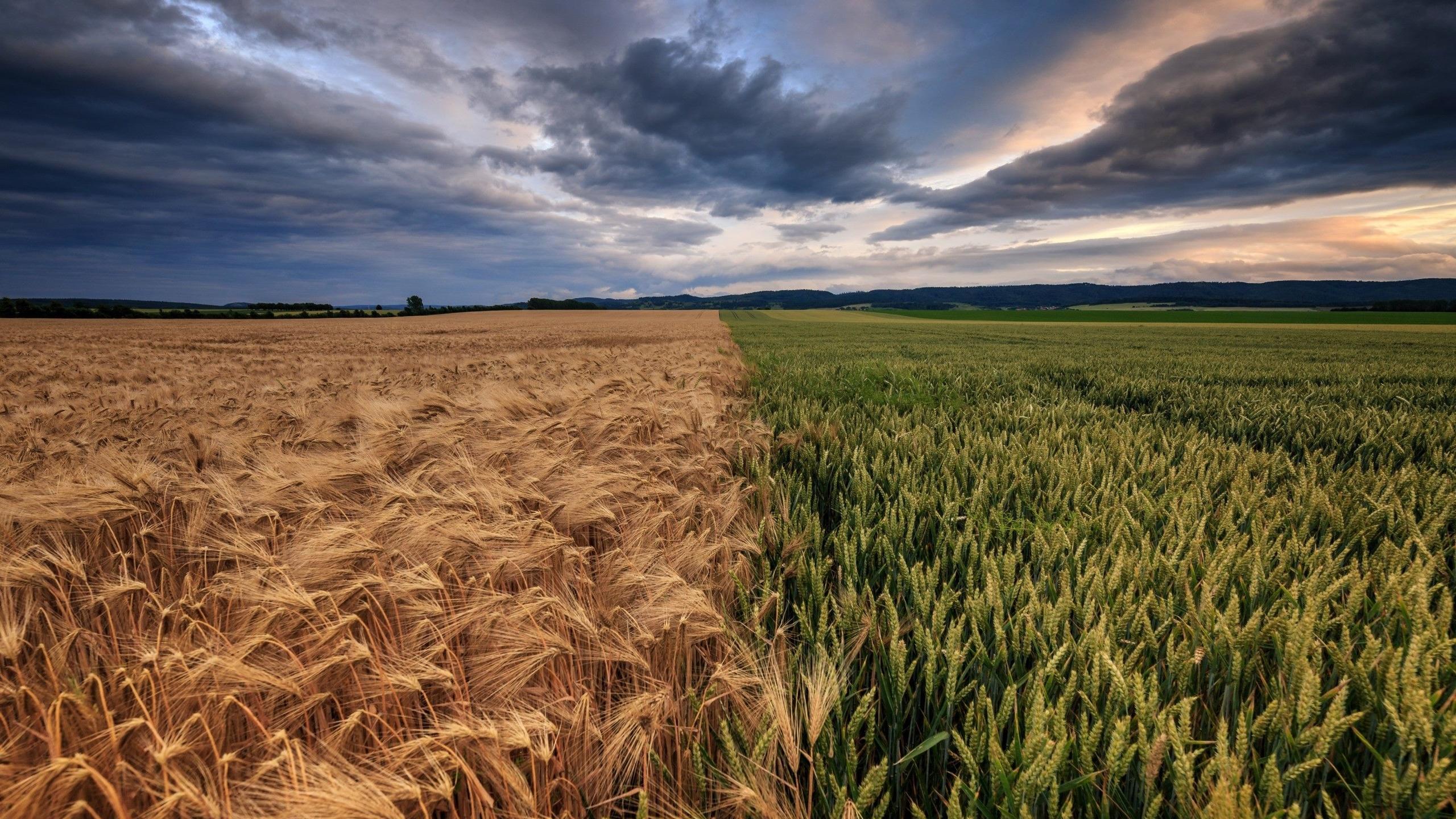 картинка рядом с полем более распространенным