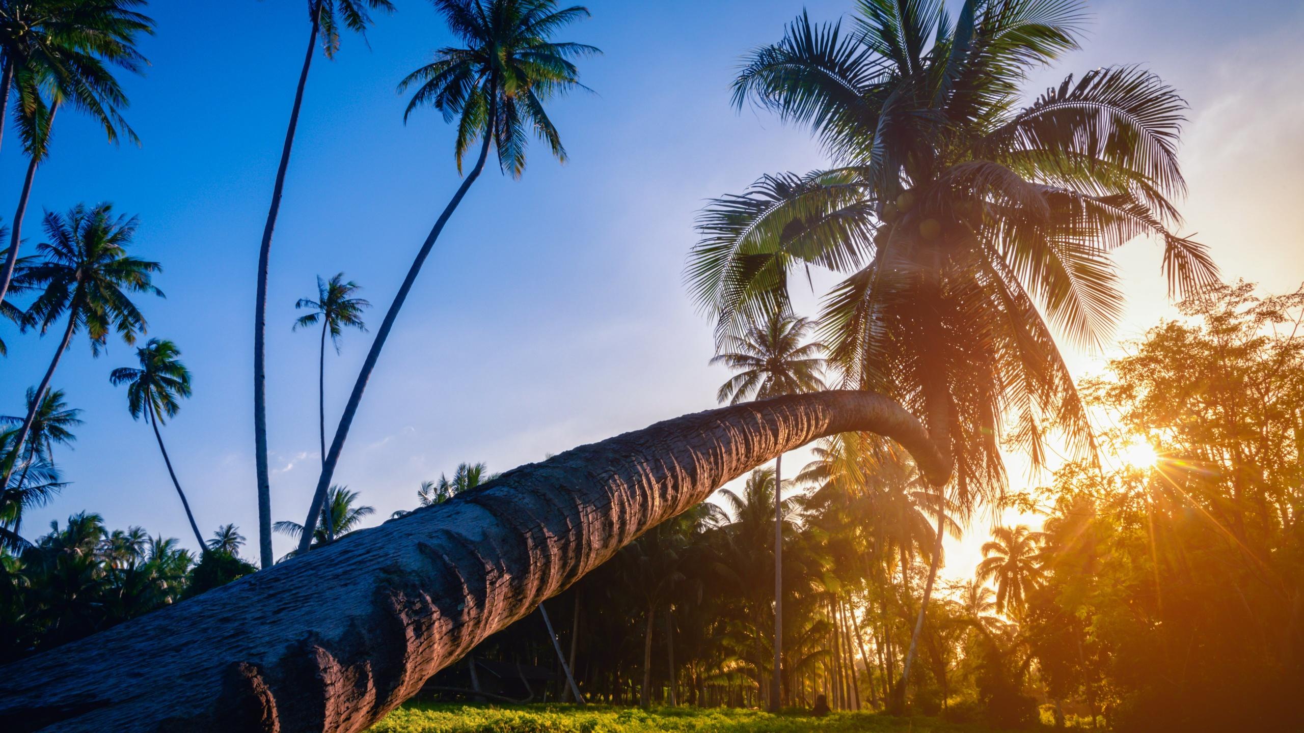 картинка пальмы и солнца милей прекрасно уловили