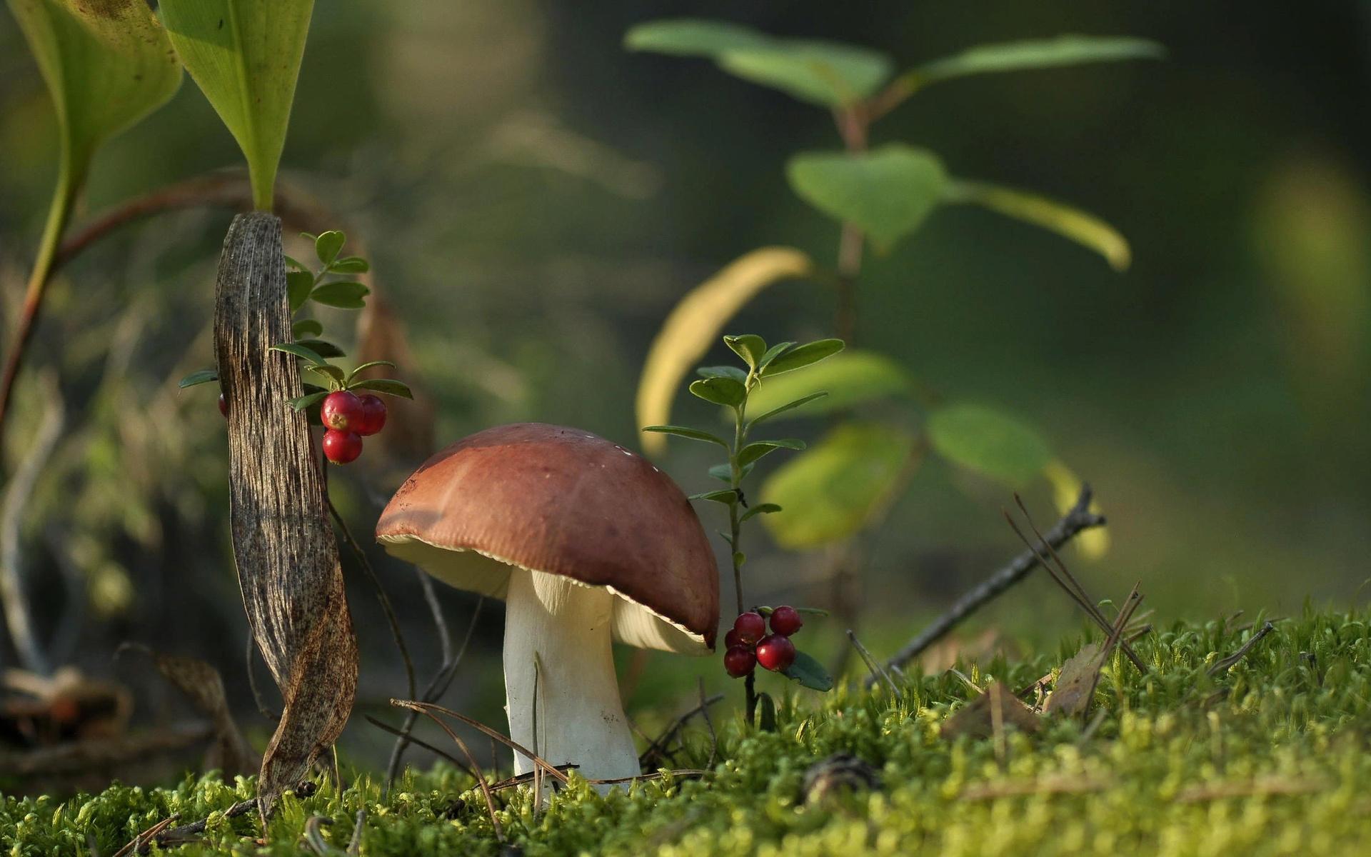 Картинки летнего леса с грибами и ягодами