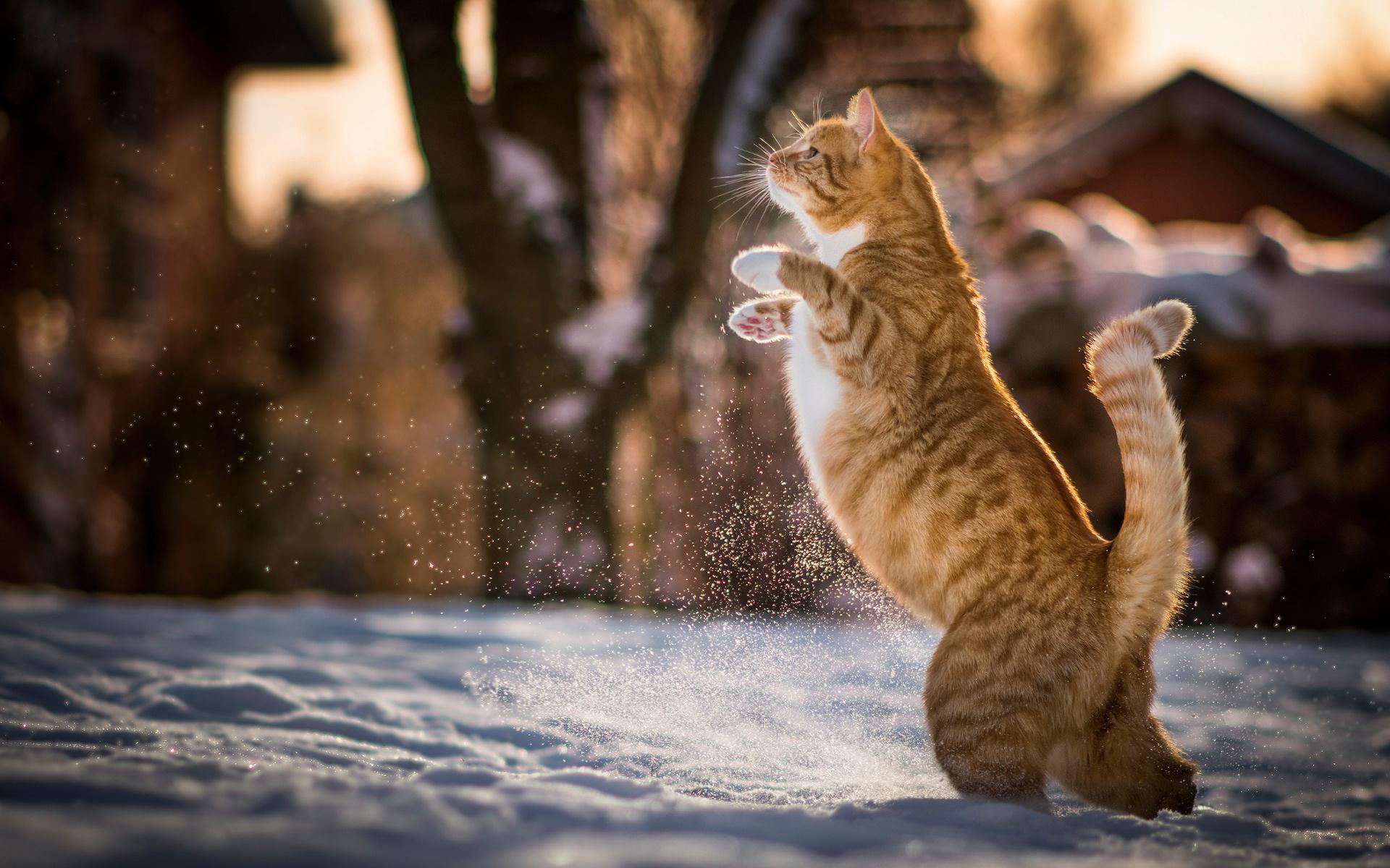 Картинки кошки и зима