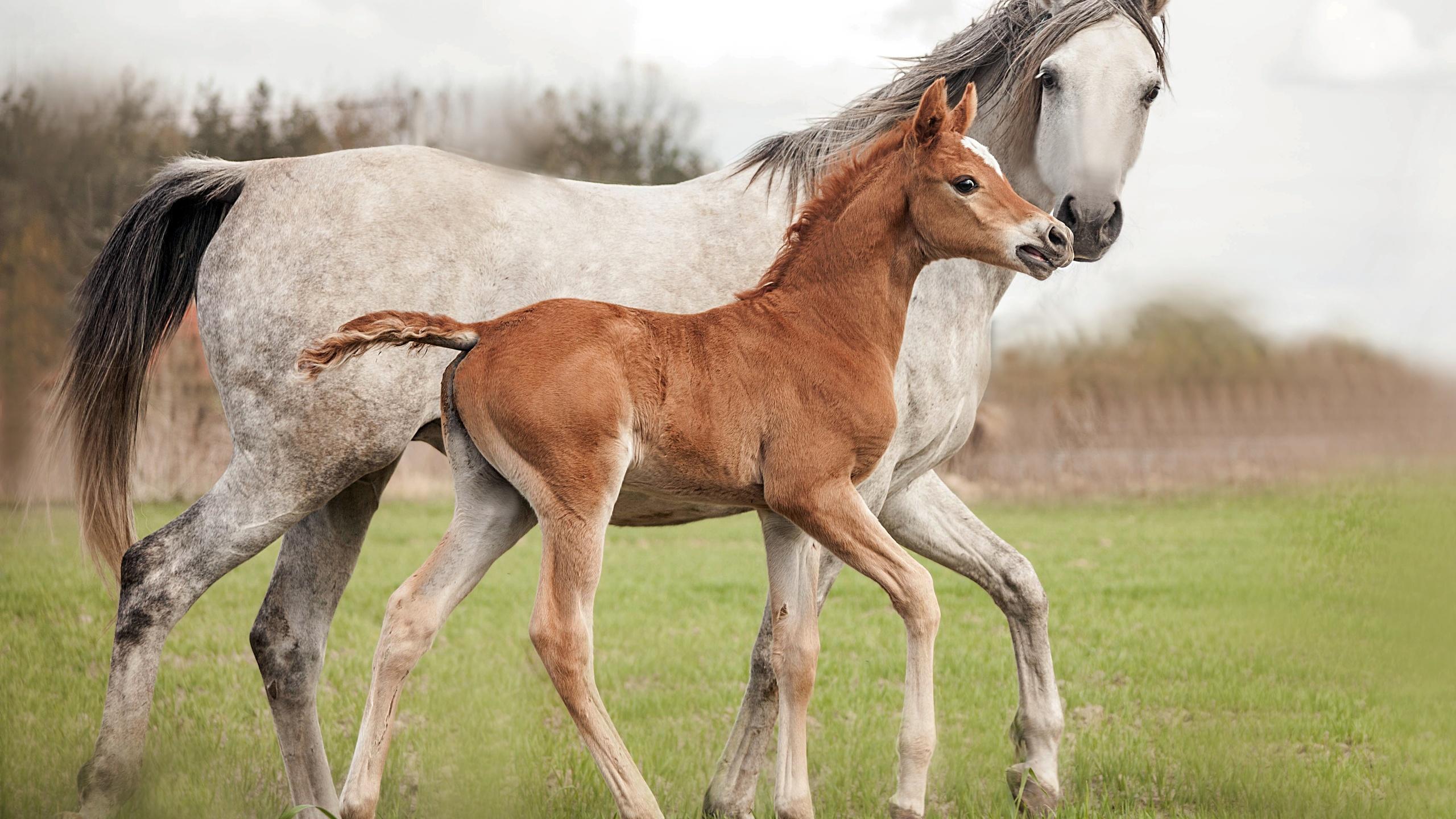 газа картинки лошадь и жеребята пользователи