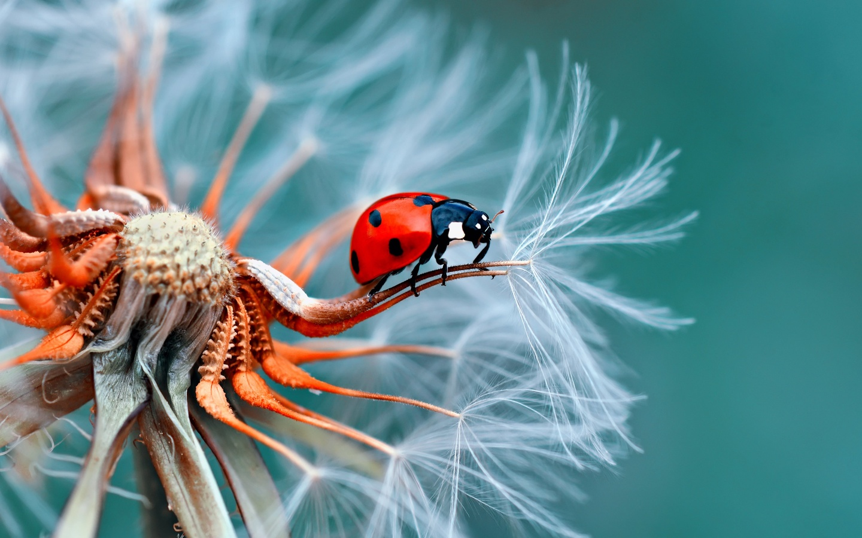 Красивые картинки микромира