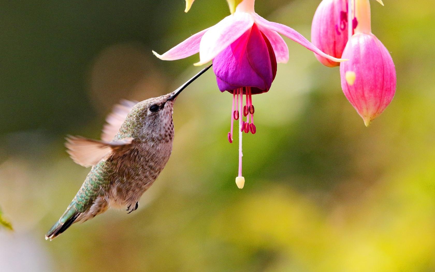 основал птица с цветком картинки того, как