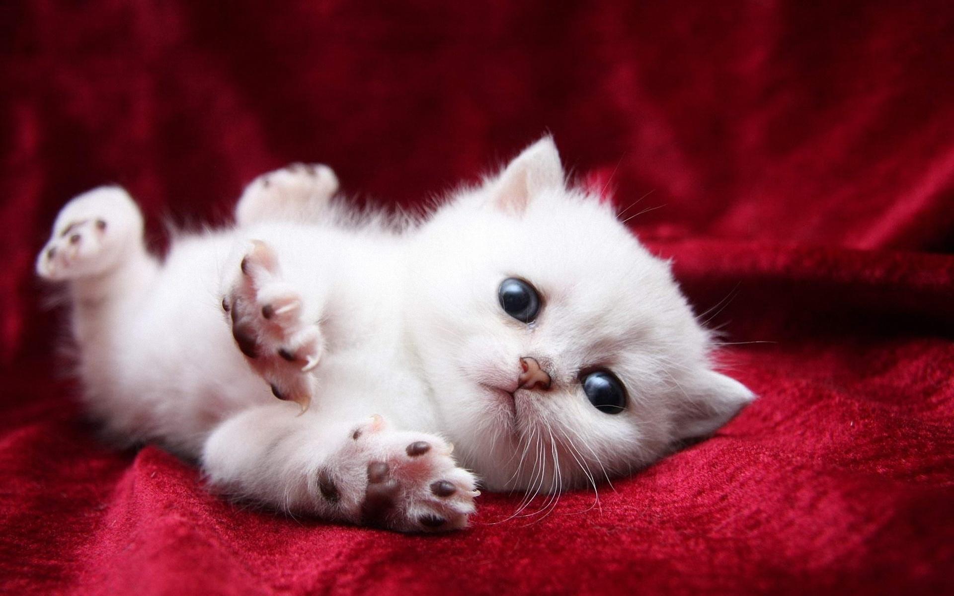 Картинки хорошенькие котята
