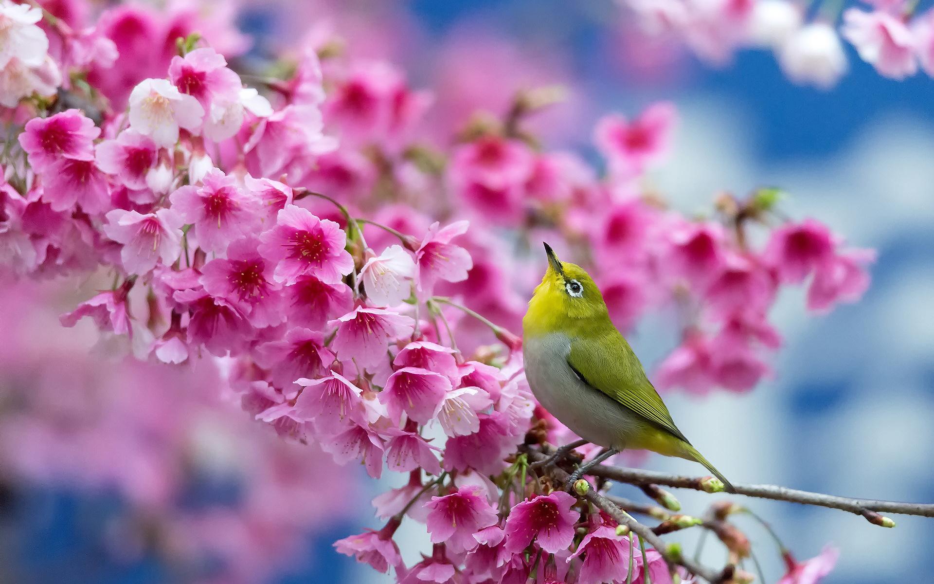 позволяет весна картинки на экран телефона для постного