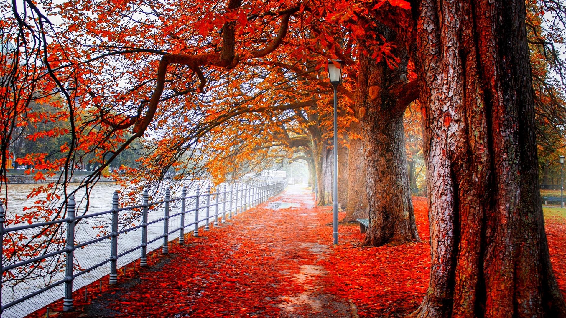 картинки осень на сони борщ