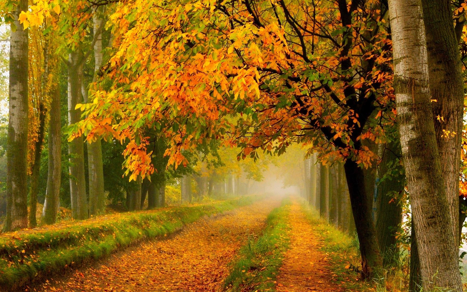 обои на пк осень природа колоды карт
