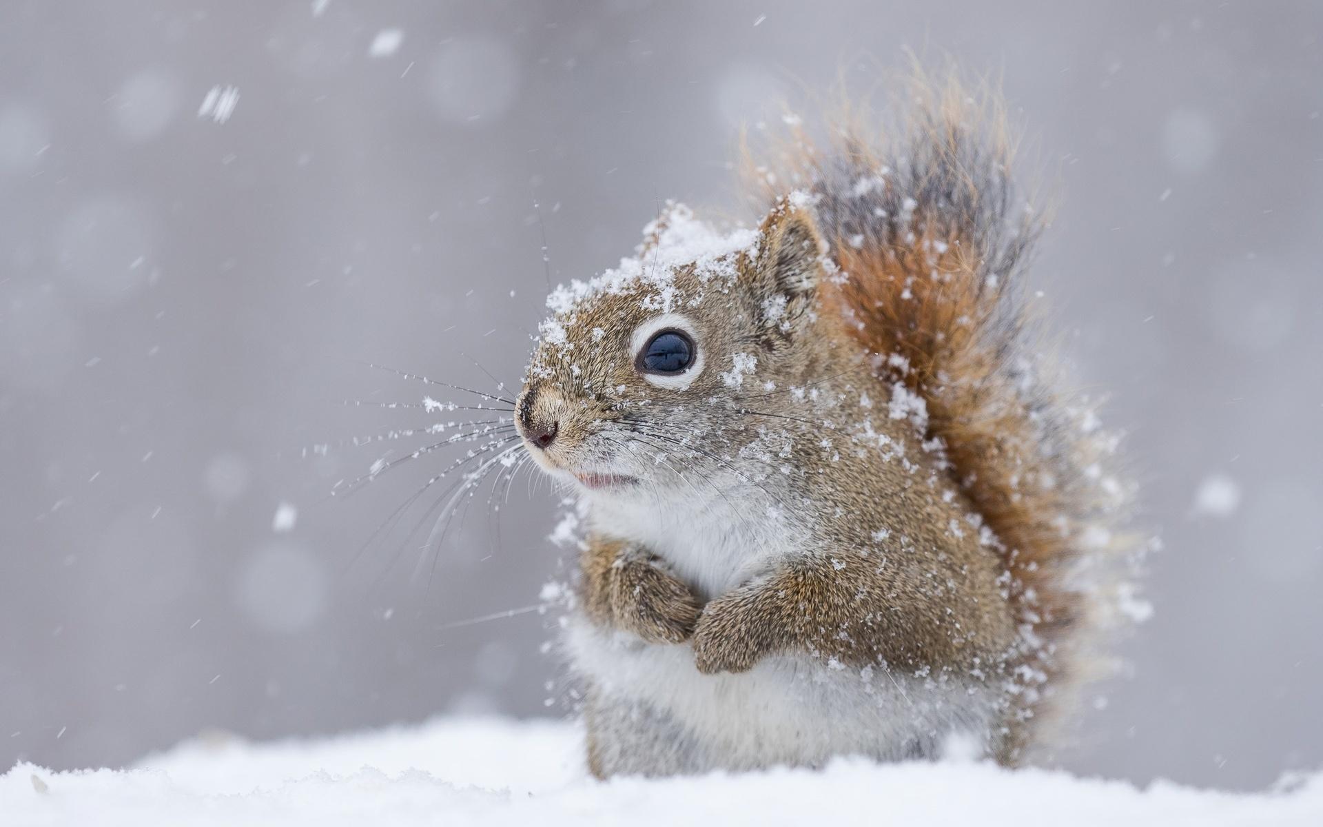 Красивые картинки животные зима