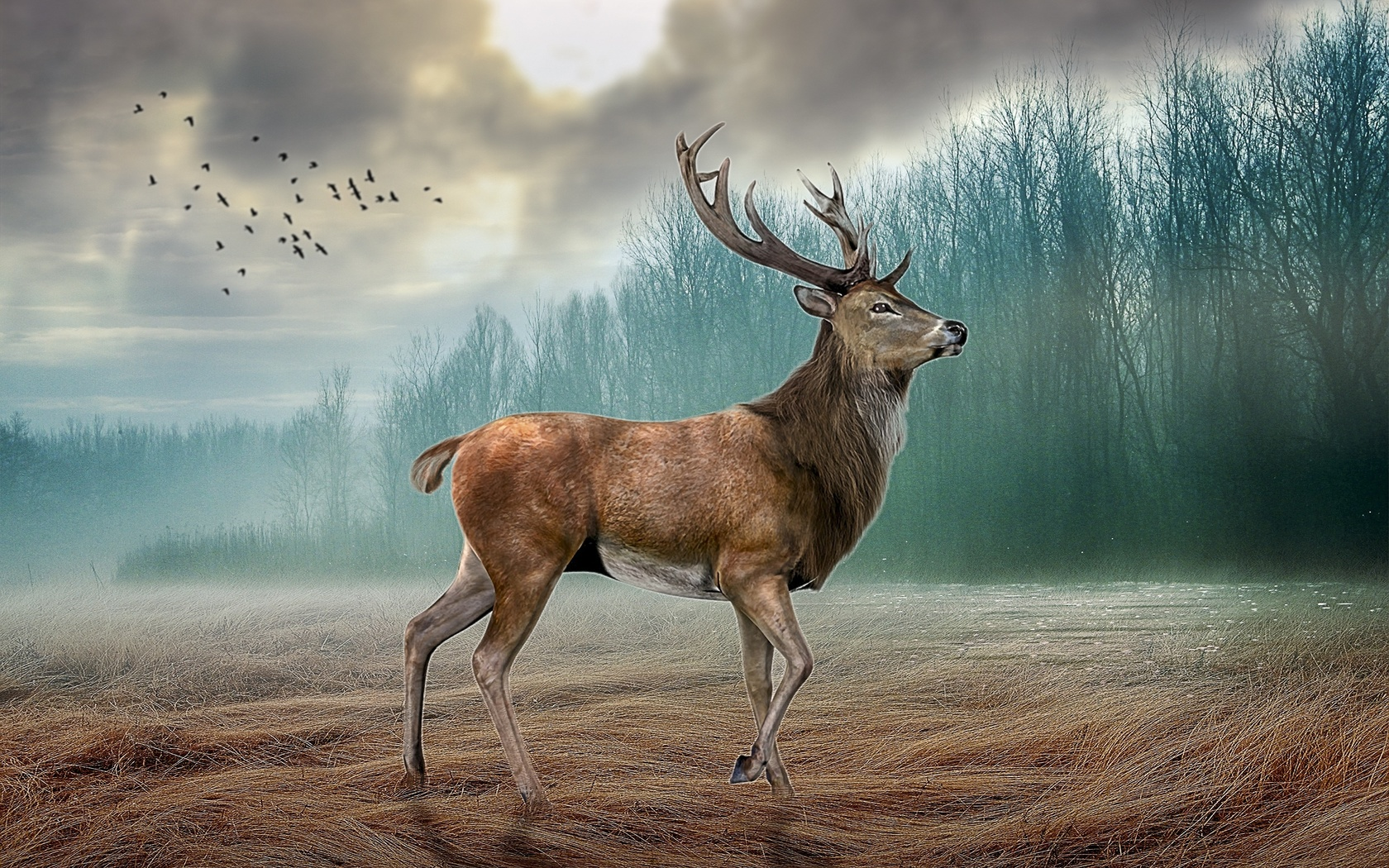 Картинка олень уходи