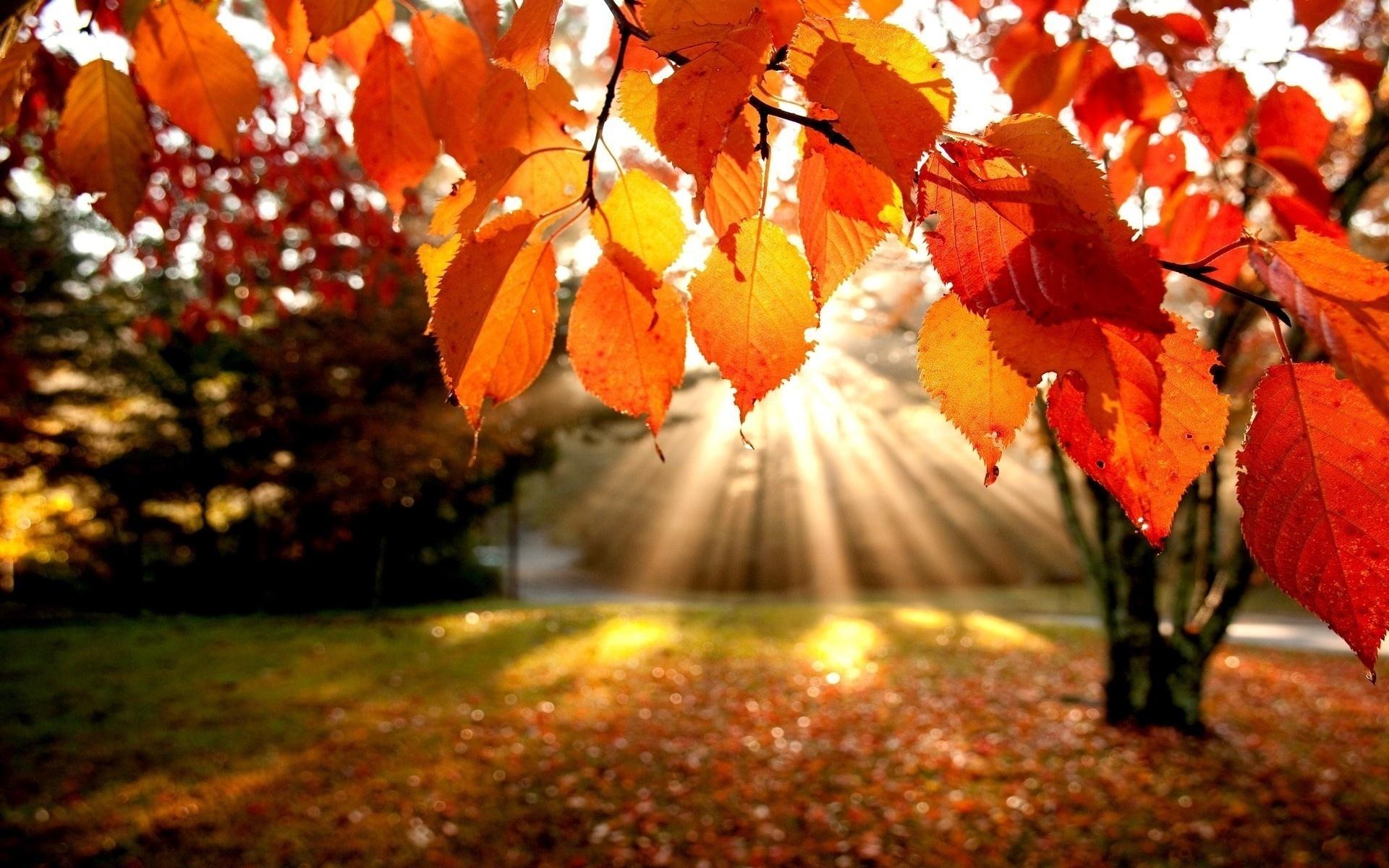 Картинки осень солнечная