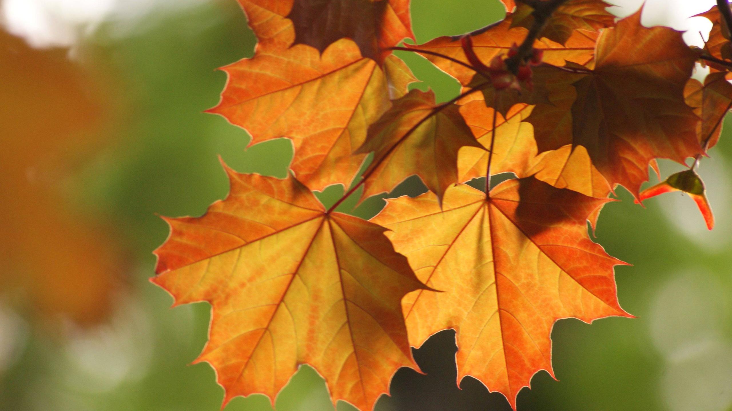 картинки про листья подобрать светильник-таблетку