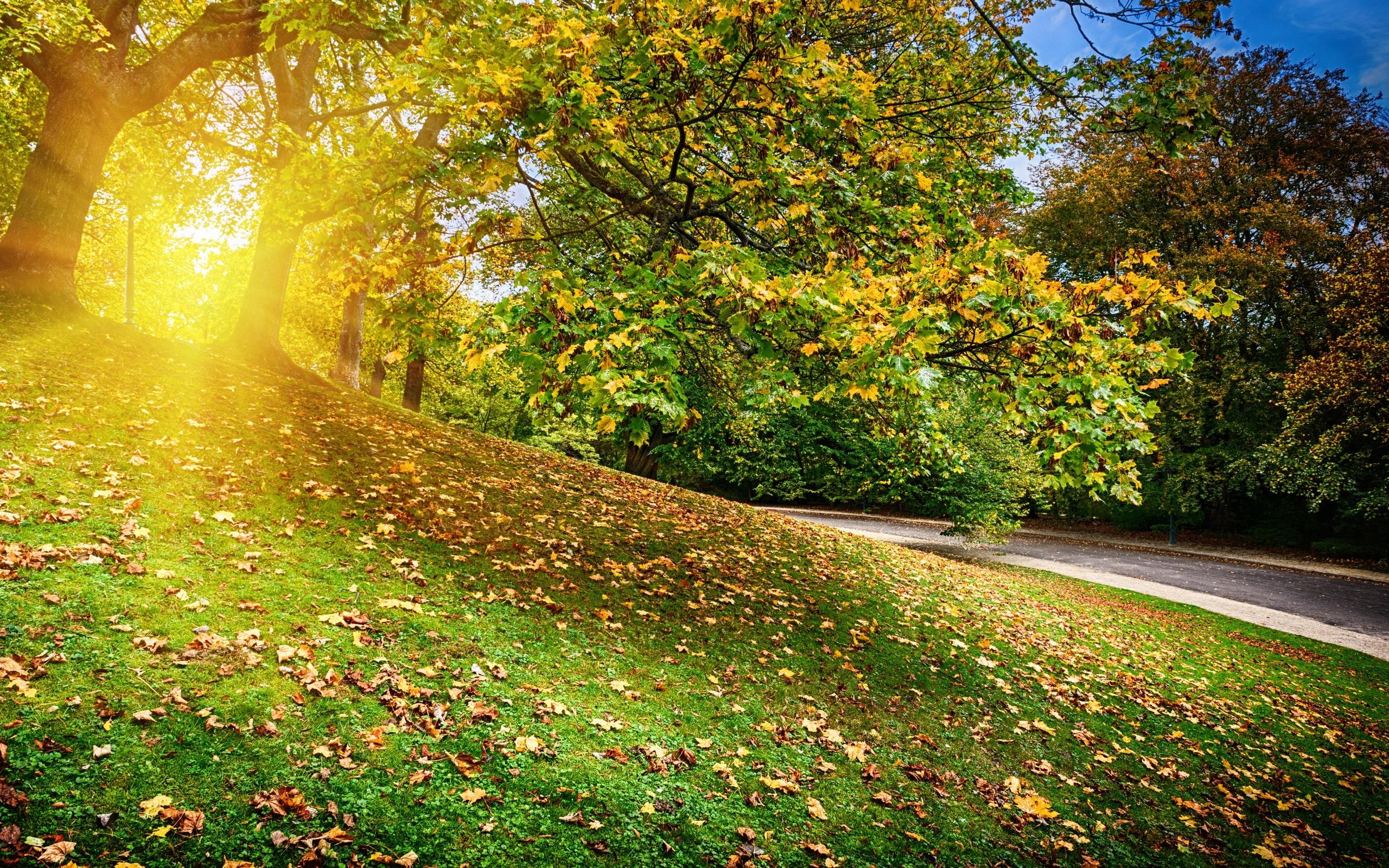 Картинки осенний парк и солнечные лучи