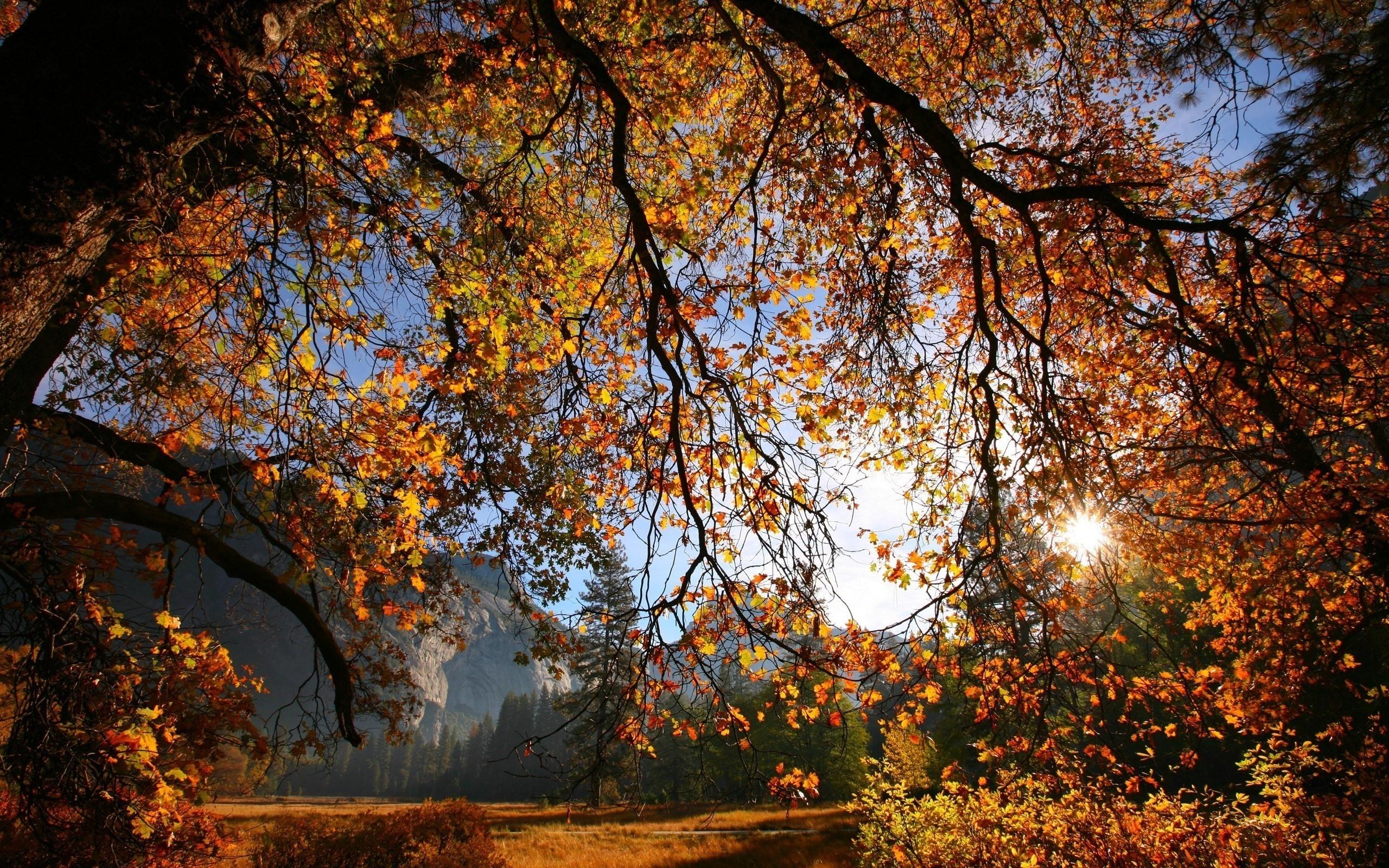 картинки золотая осень в высоком разрешении самая