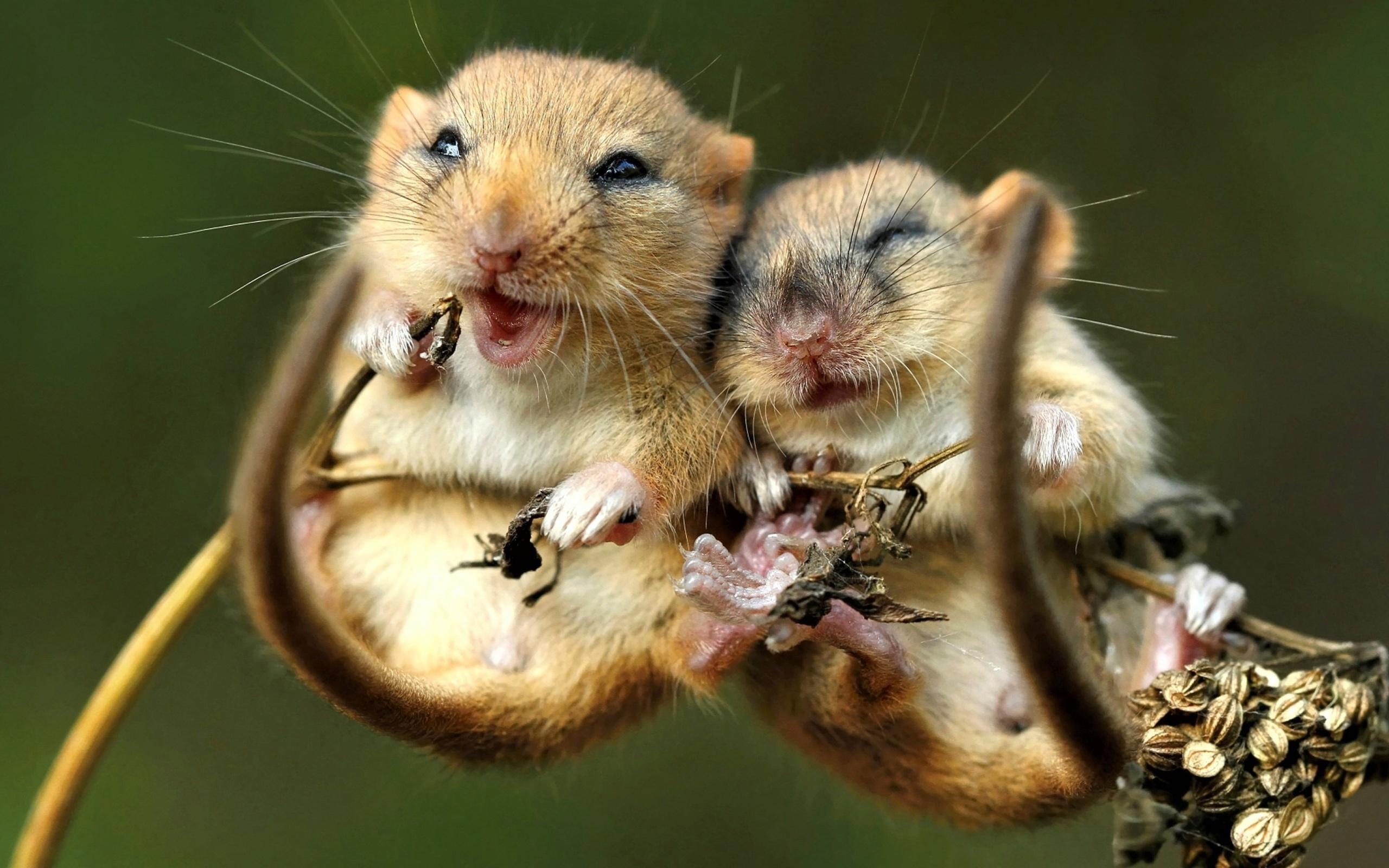 Картинки мышь смешные