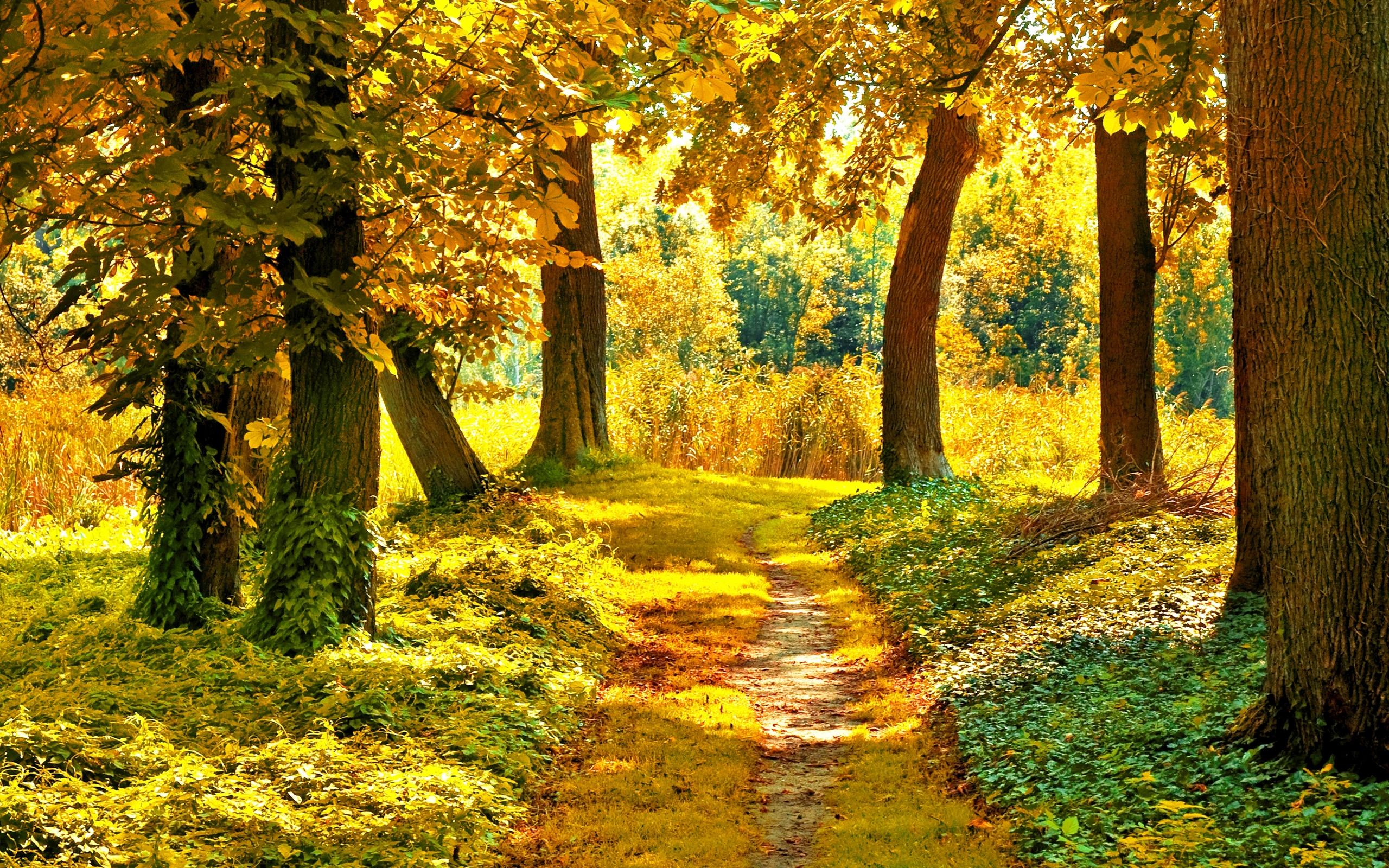 Осенний лес сказочная картинка