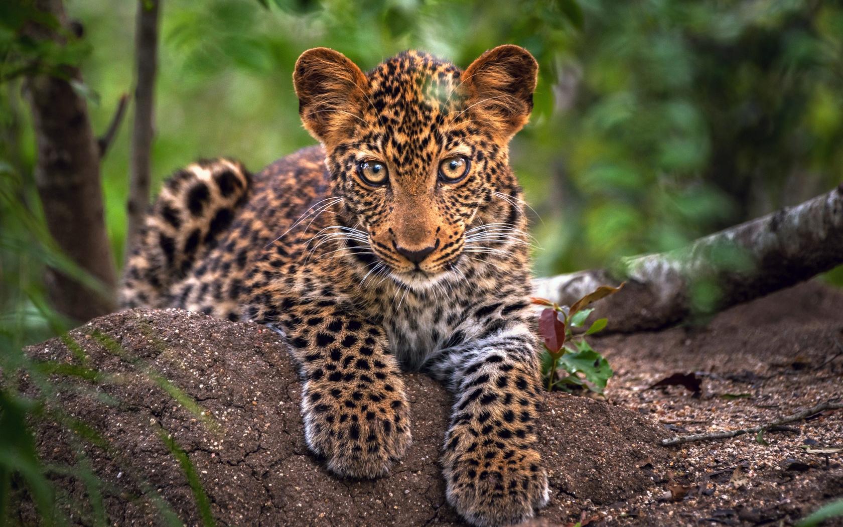 возникает картинки про самых красивых животных нужно
