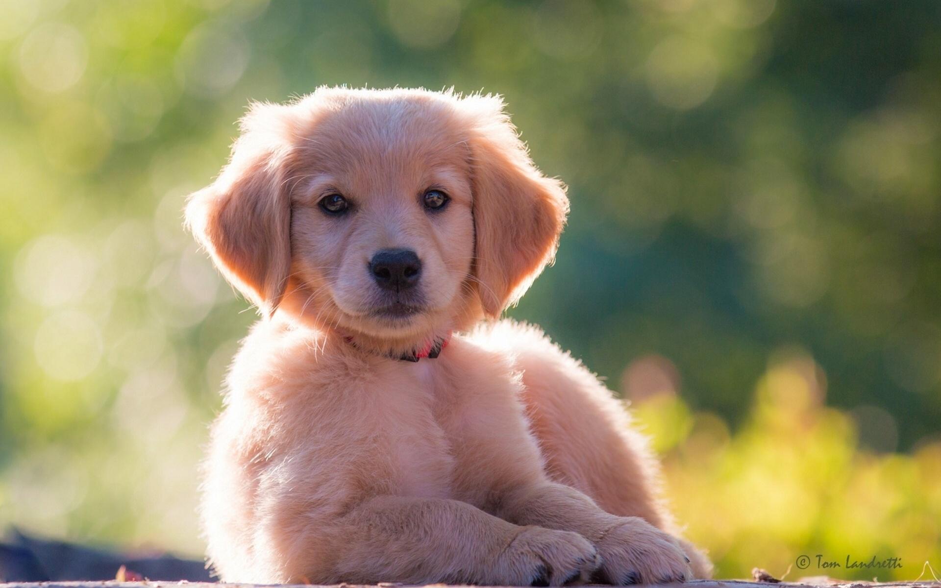 картинки собак щенки смотреть
