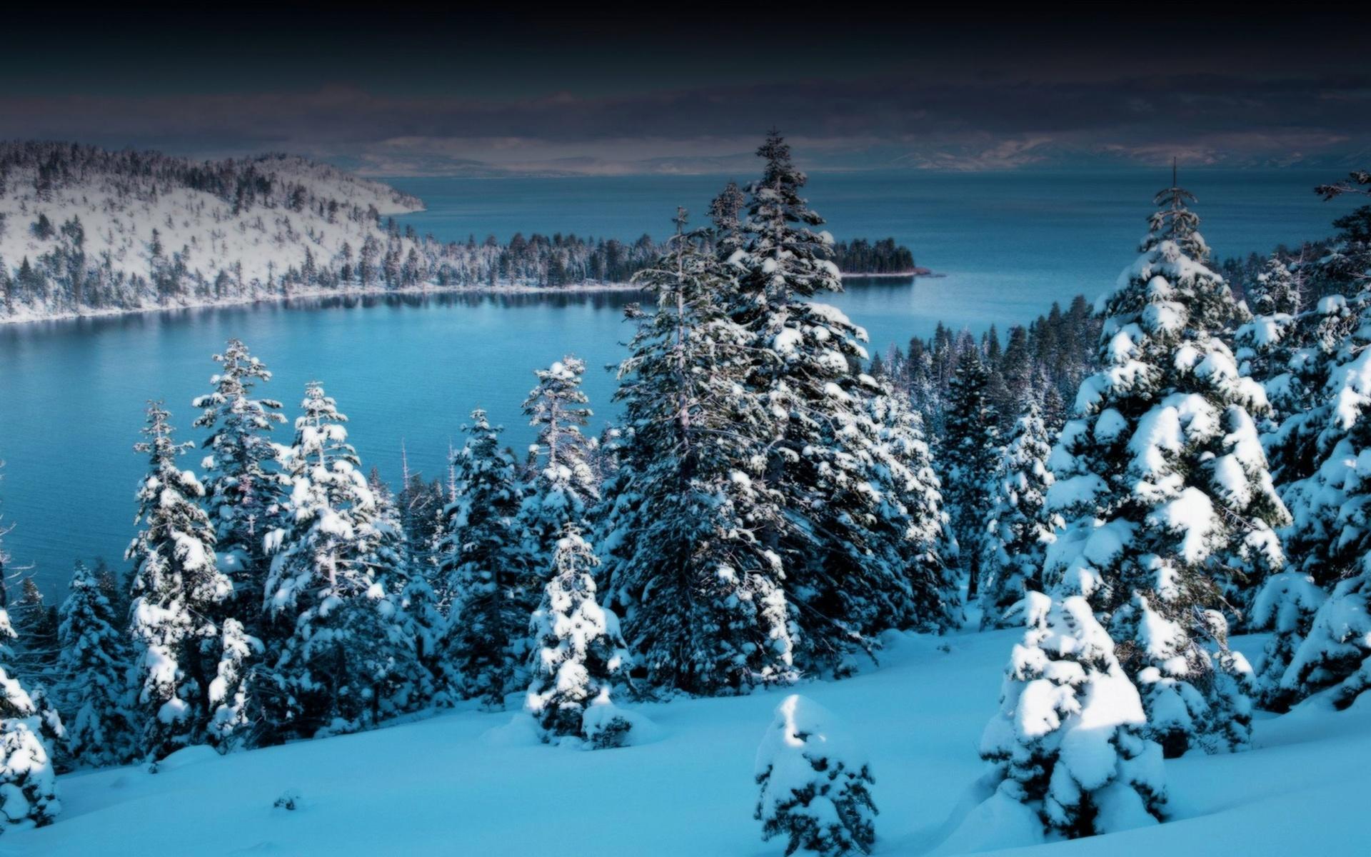 растения красивая зима большие открытки свои фото