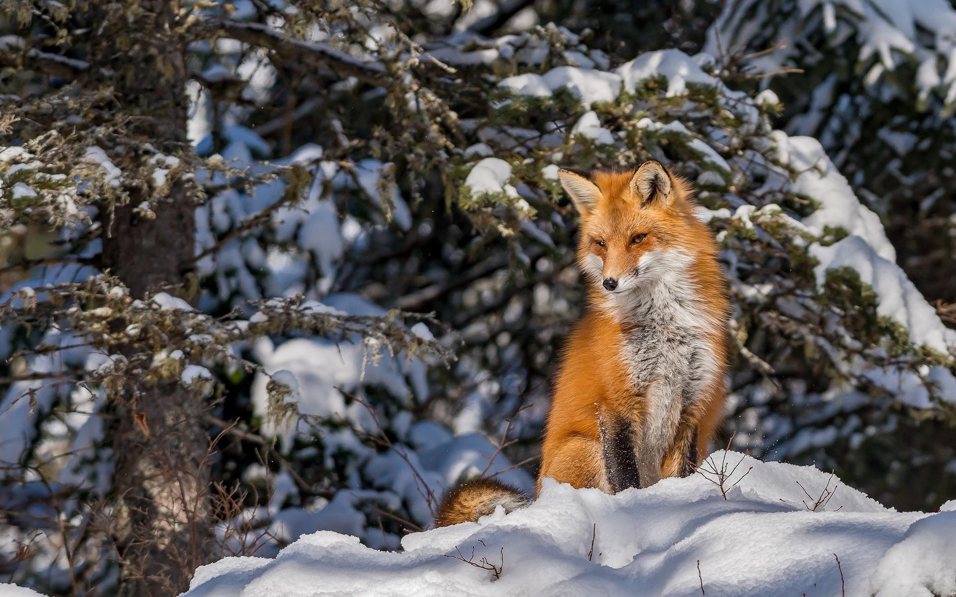 картинки животных в лесу зимой давно