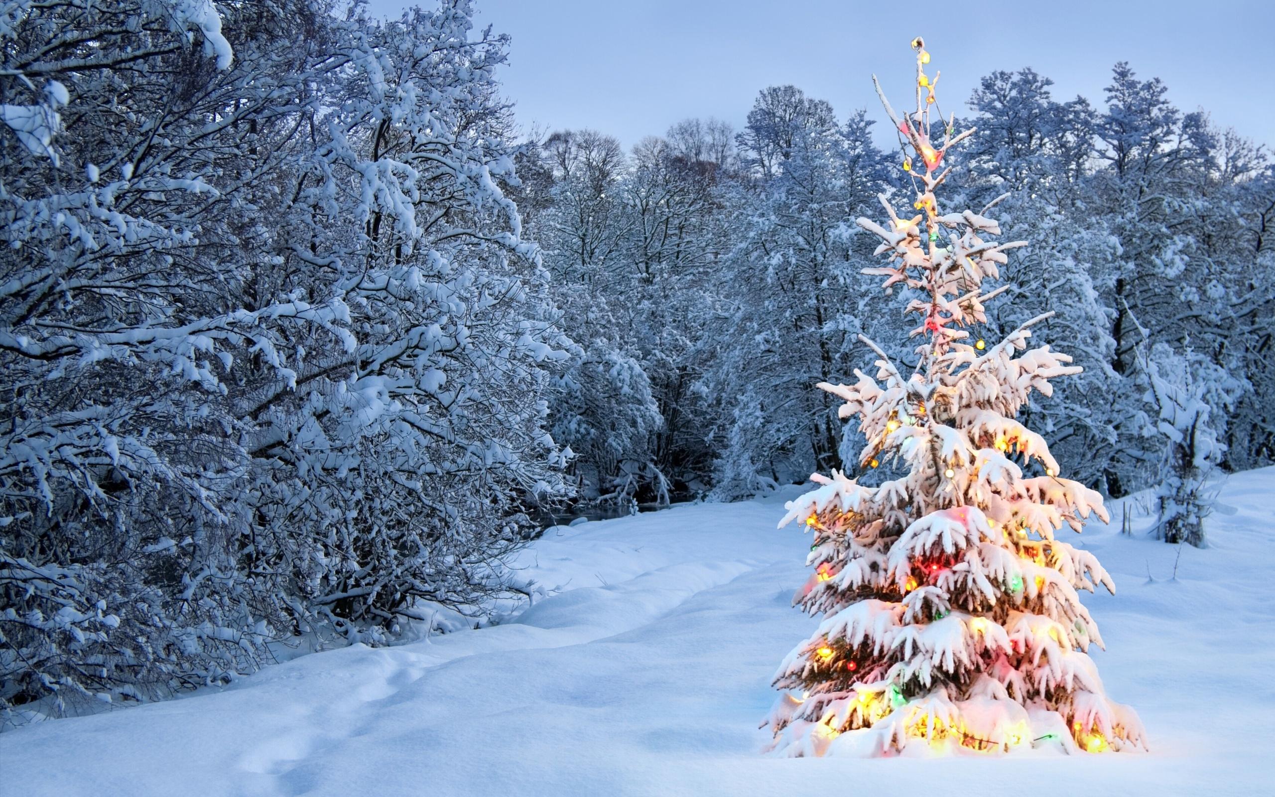 картинки елочки зимой эти сооружены были