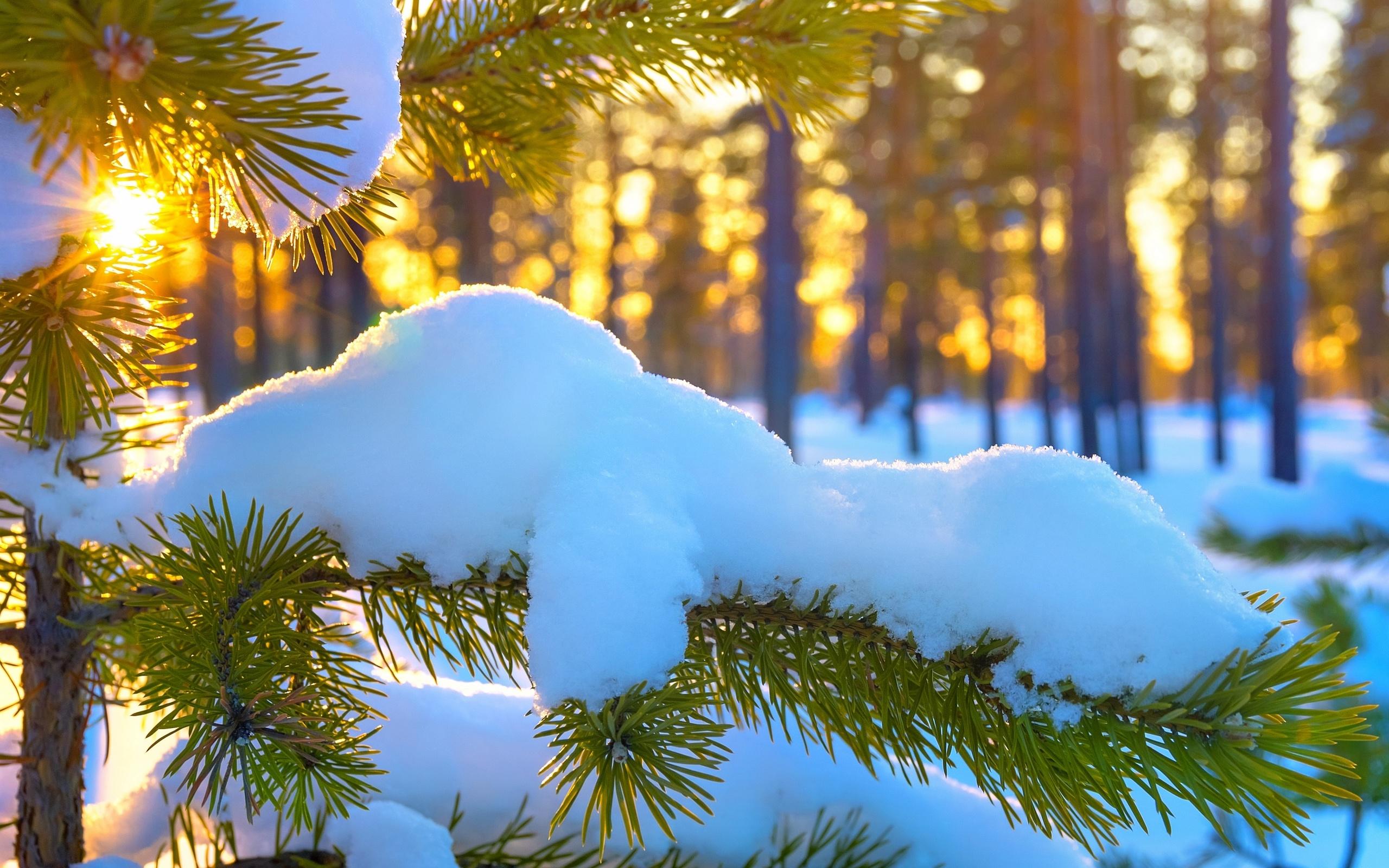 картинка отличного морозного дня показали, что