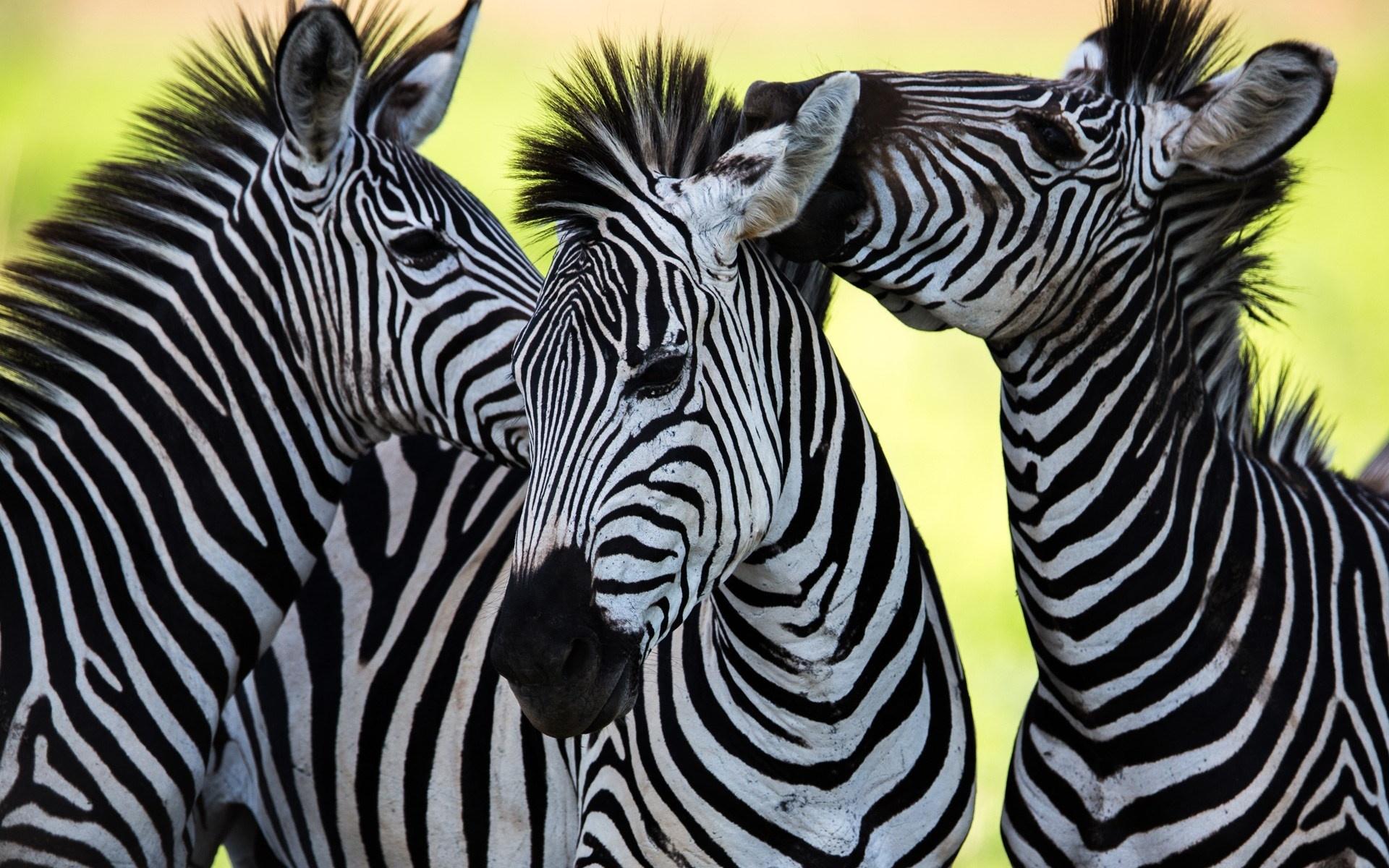 Животные в виде картинок
