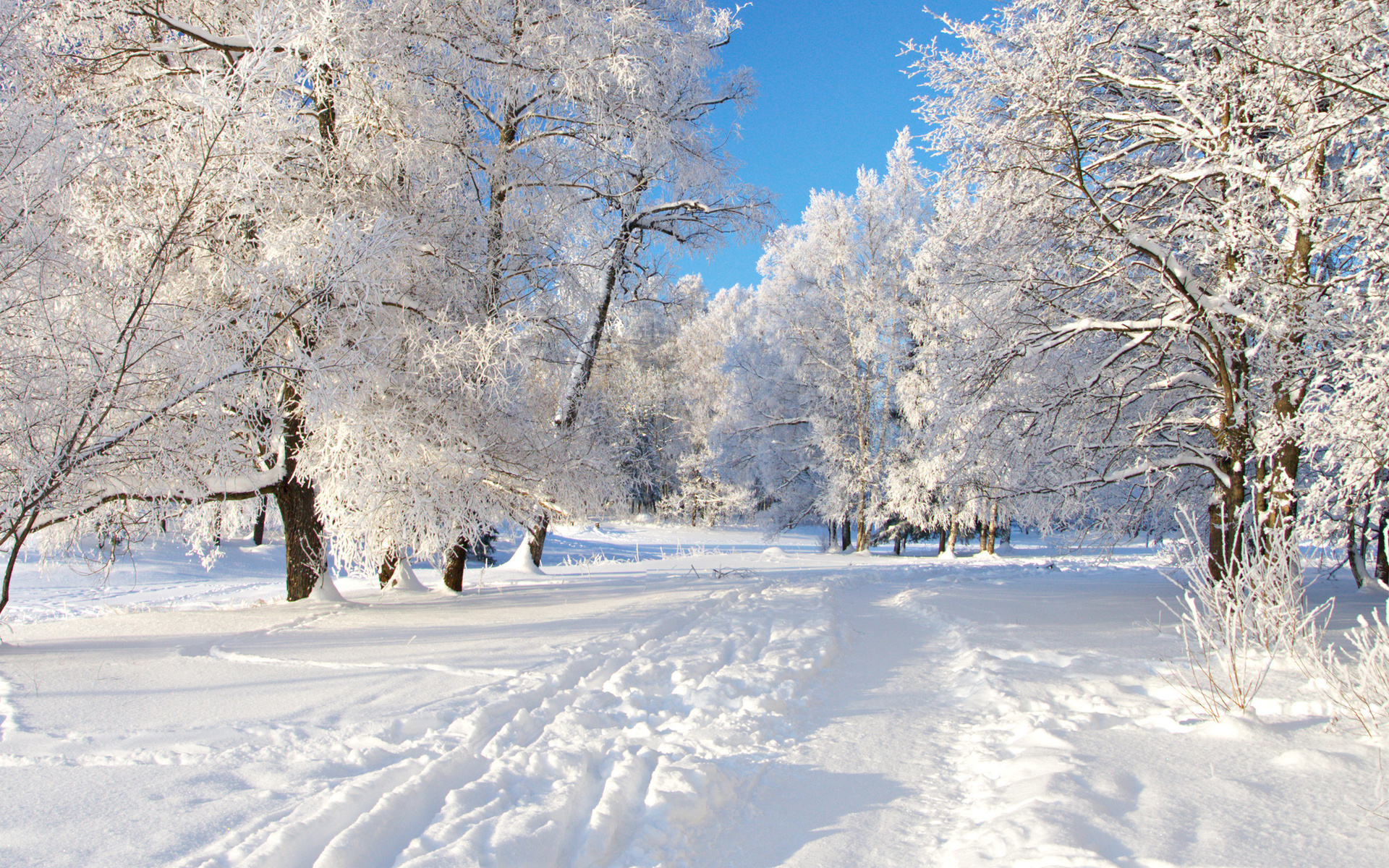 Зима для картинки