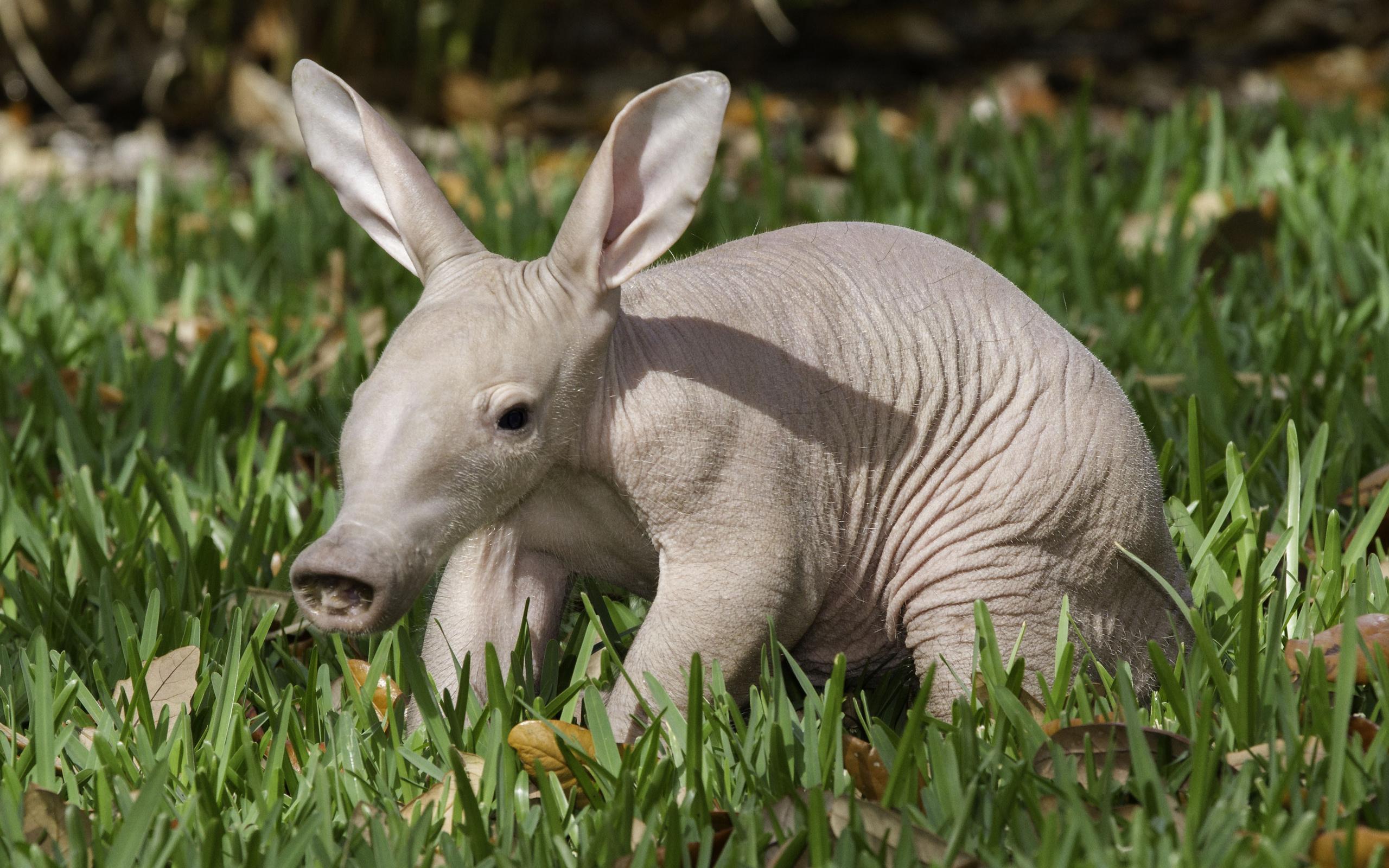 фотографии самых редких животных это отличная