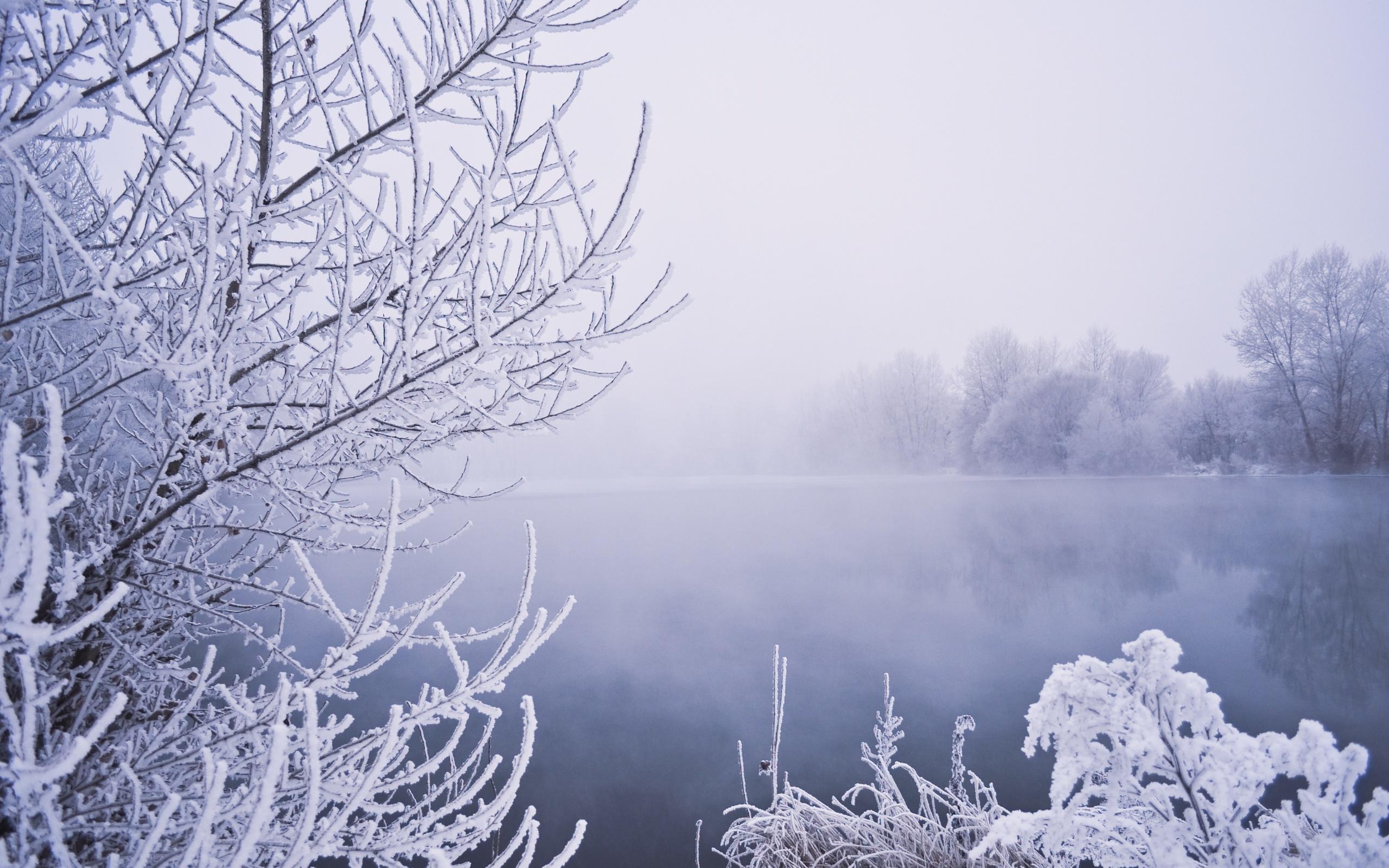 фото картинки инея дождя и снега церемонии уже успели