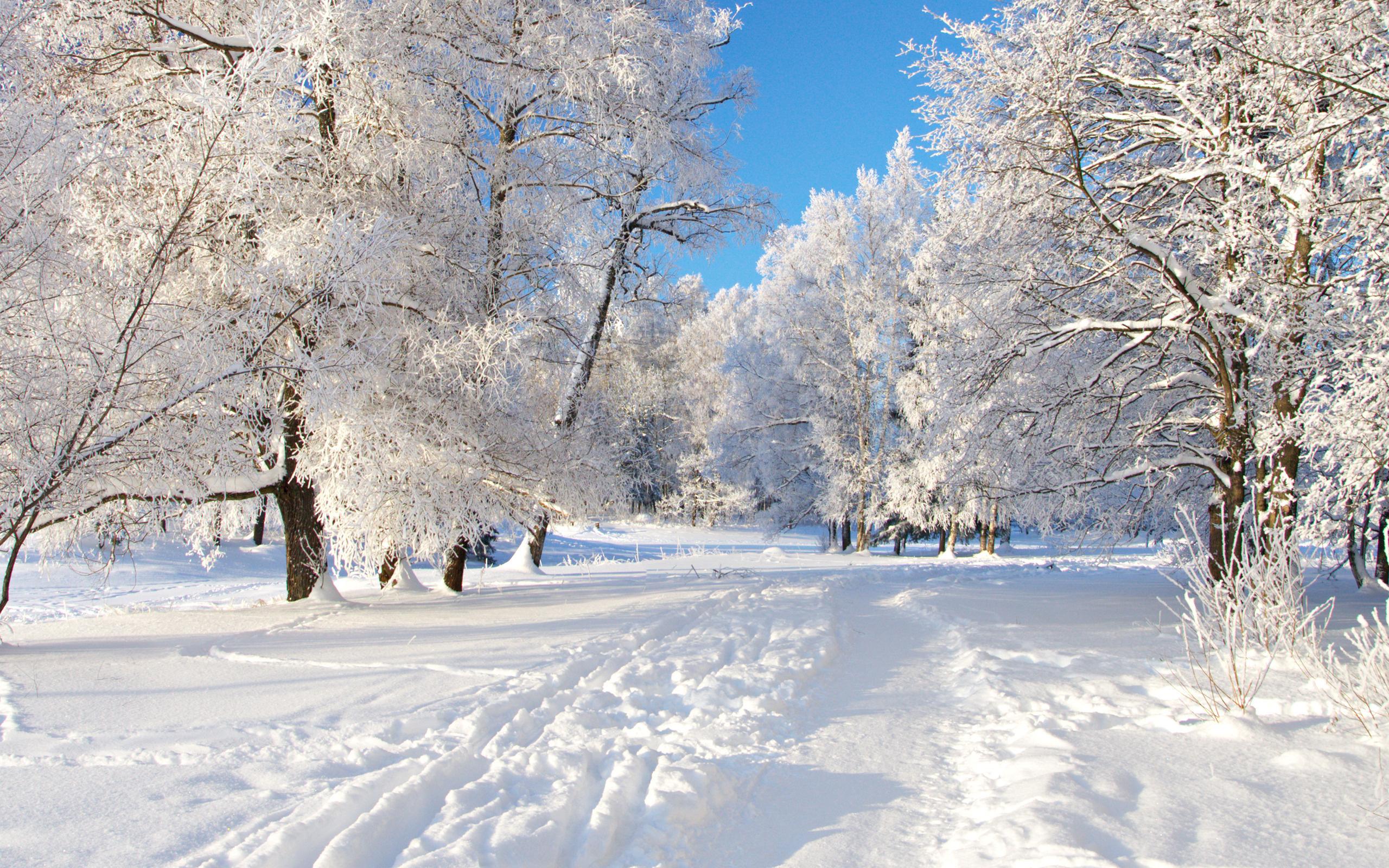 свадьбу зима в россии картинки на телефон фото девушка позирует