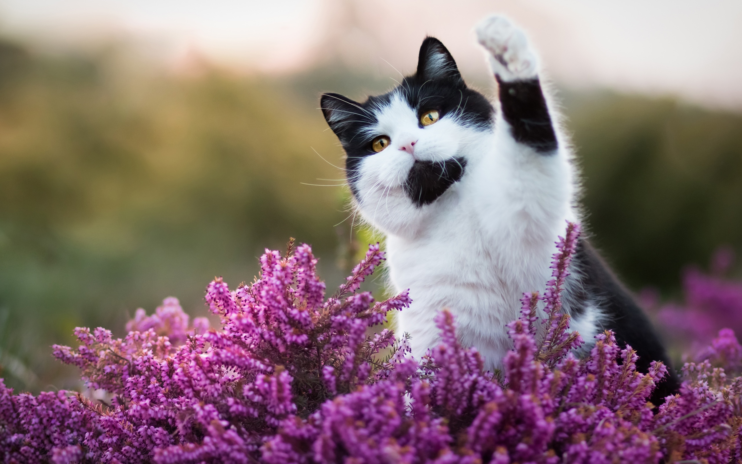 кошка цветы красиво фотография складывается