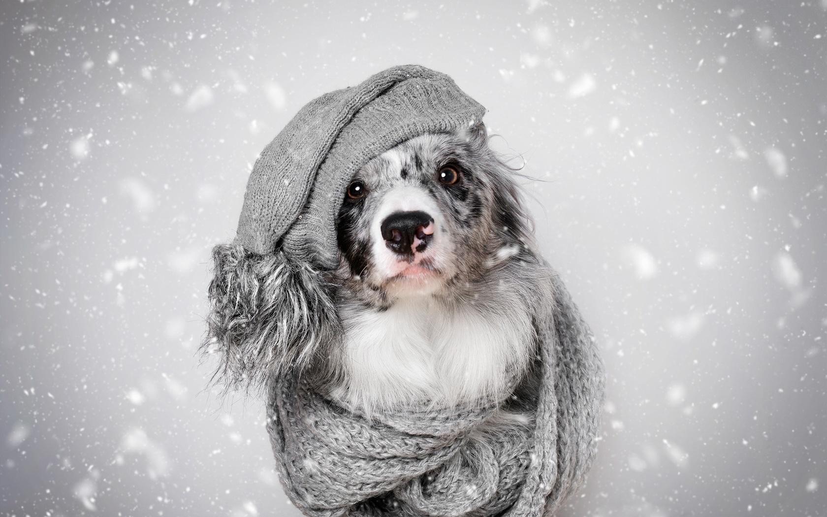 красивые зимние картинки на аватарку с собачками