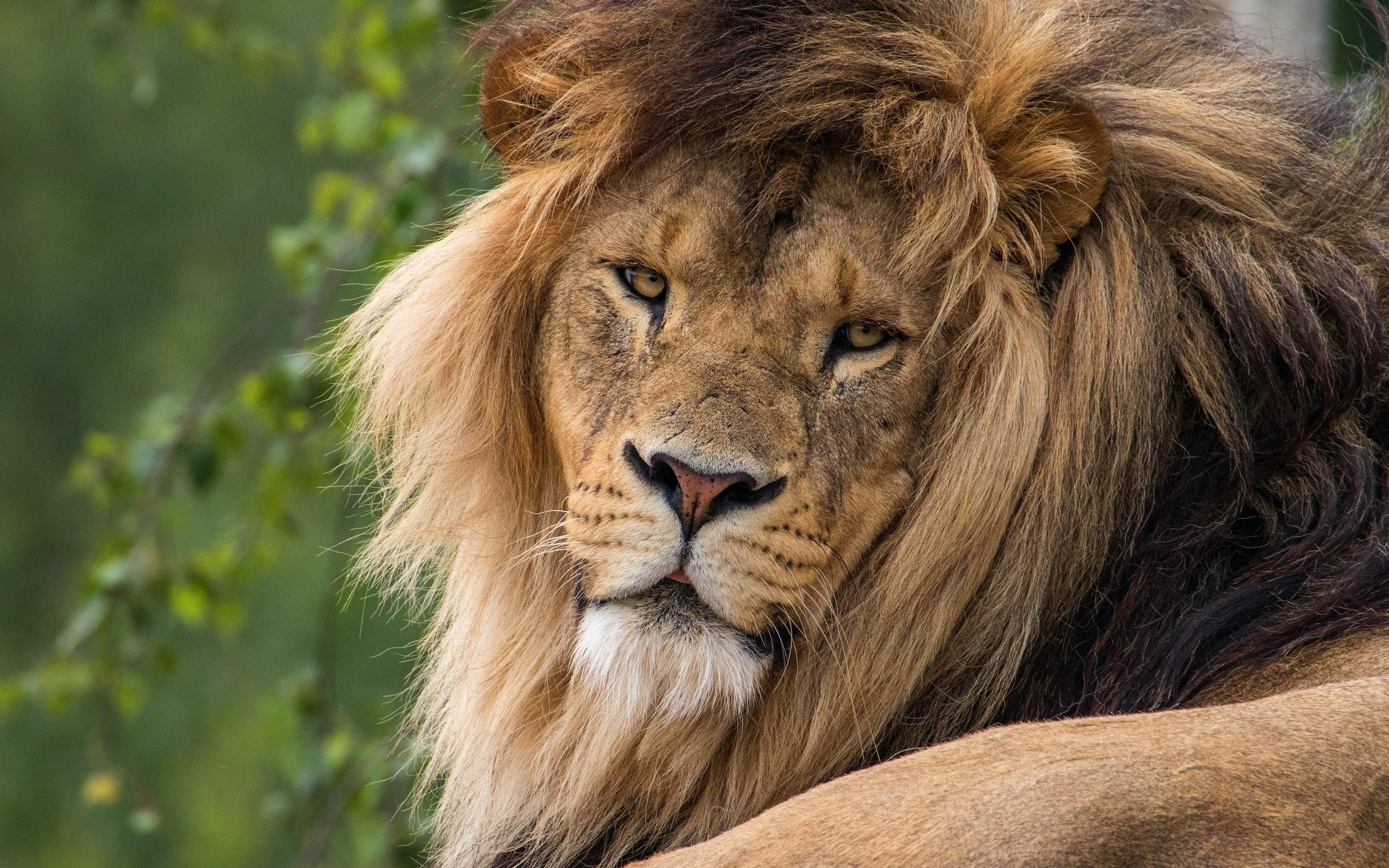 Львов смотреть картинки