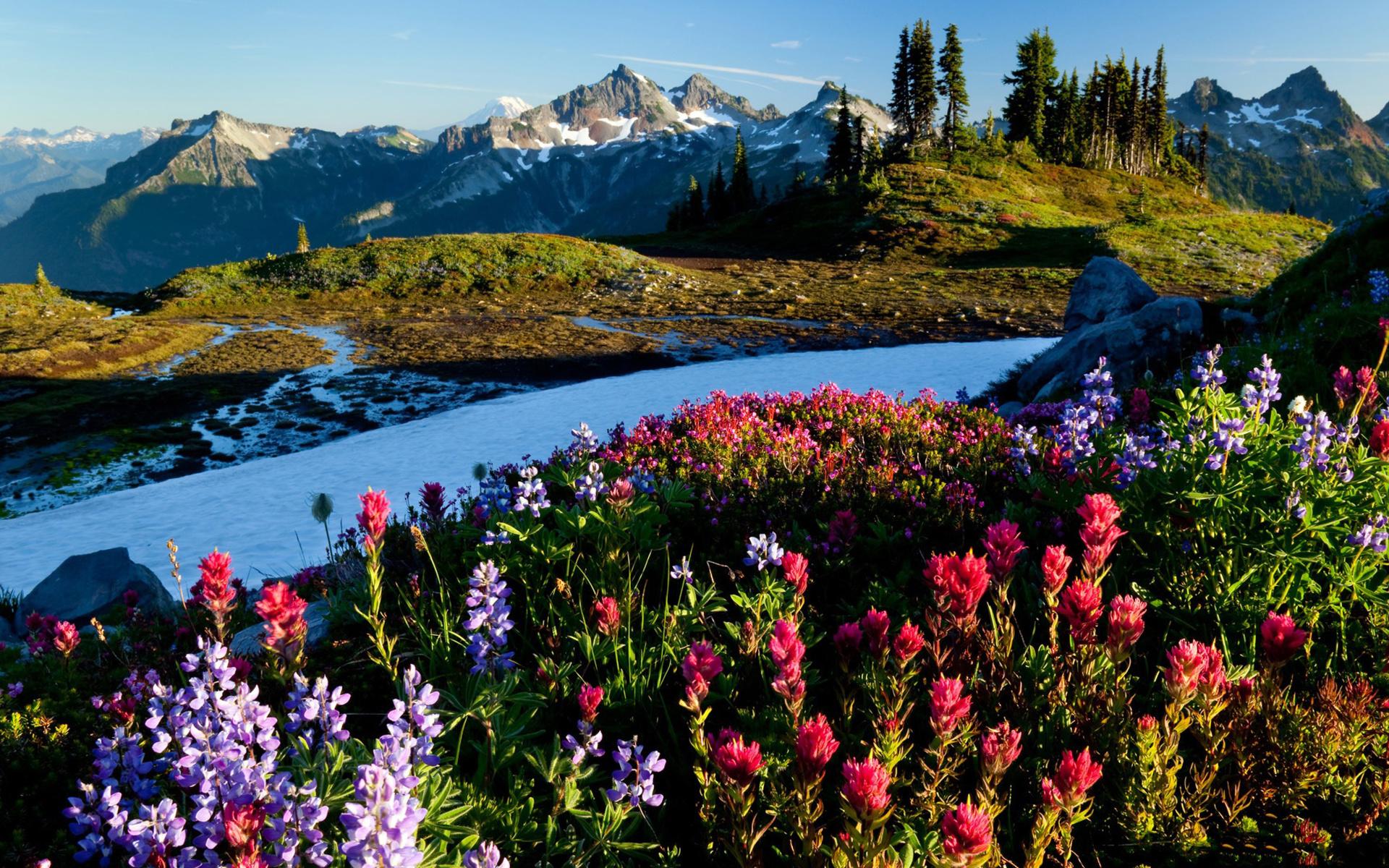 меня очень красивые картинки с природой и цветами каждой