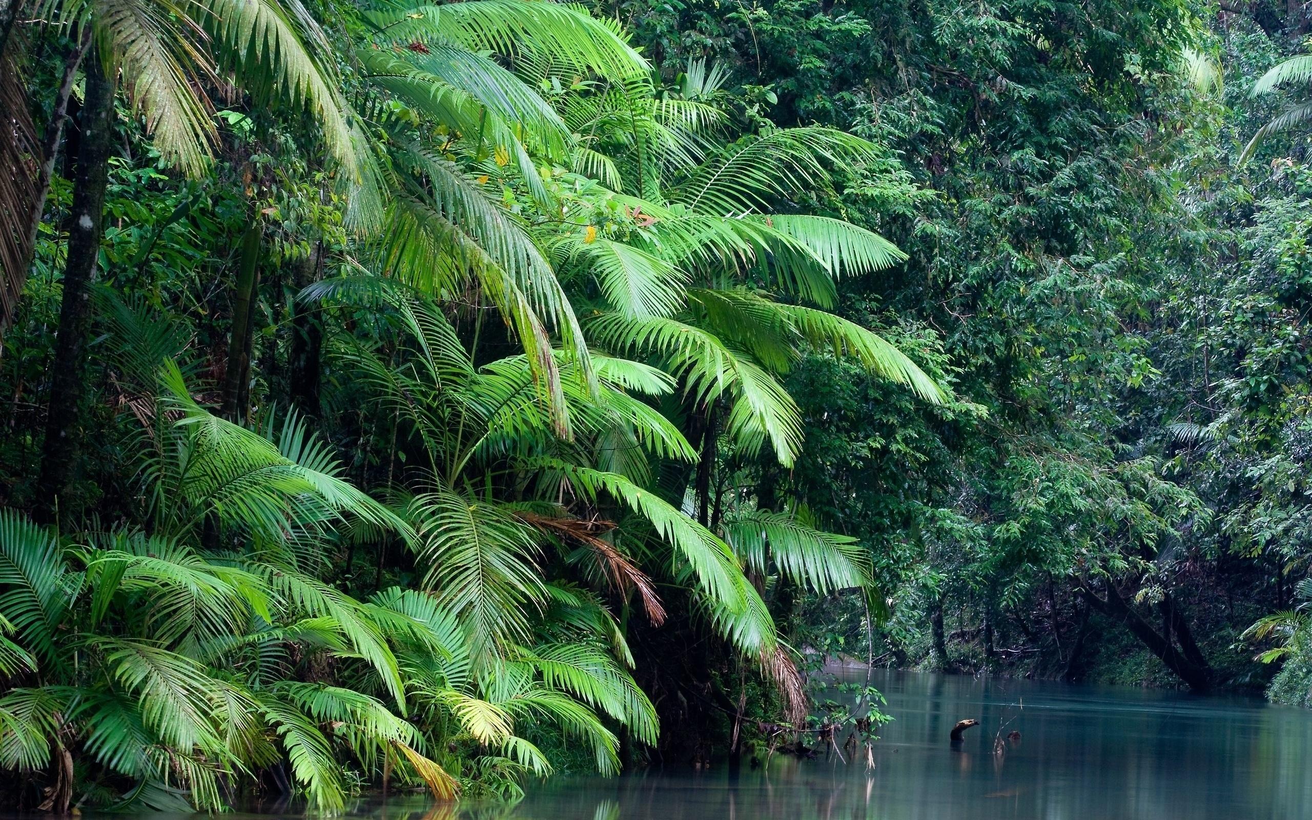 Картинки в тропиках