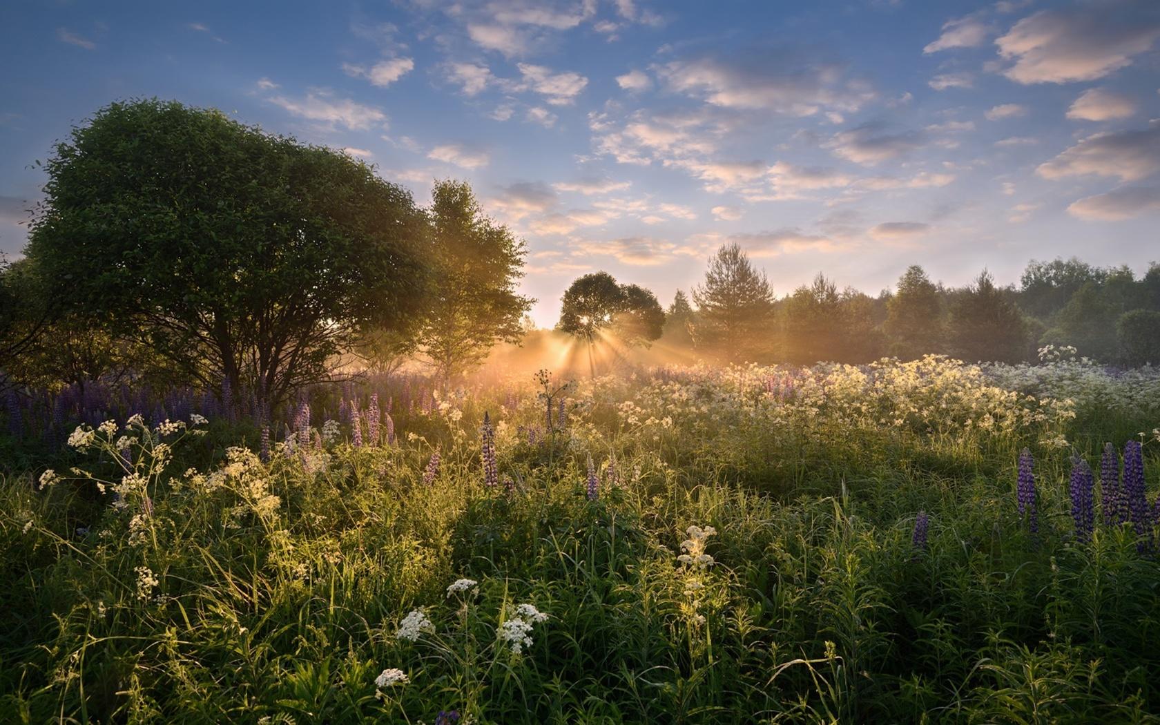 Картинки утренний летний пейзаж