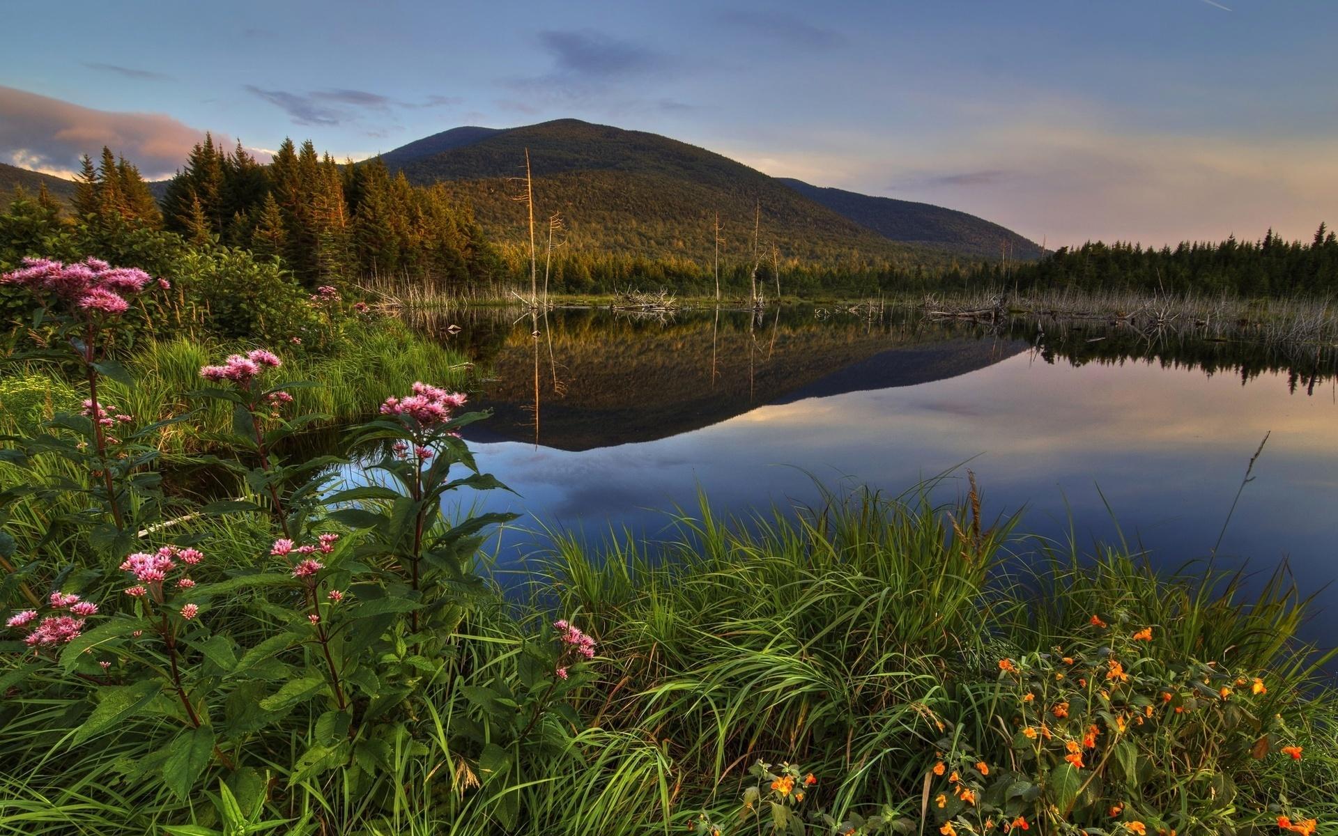 Картинки природа озеро цветы