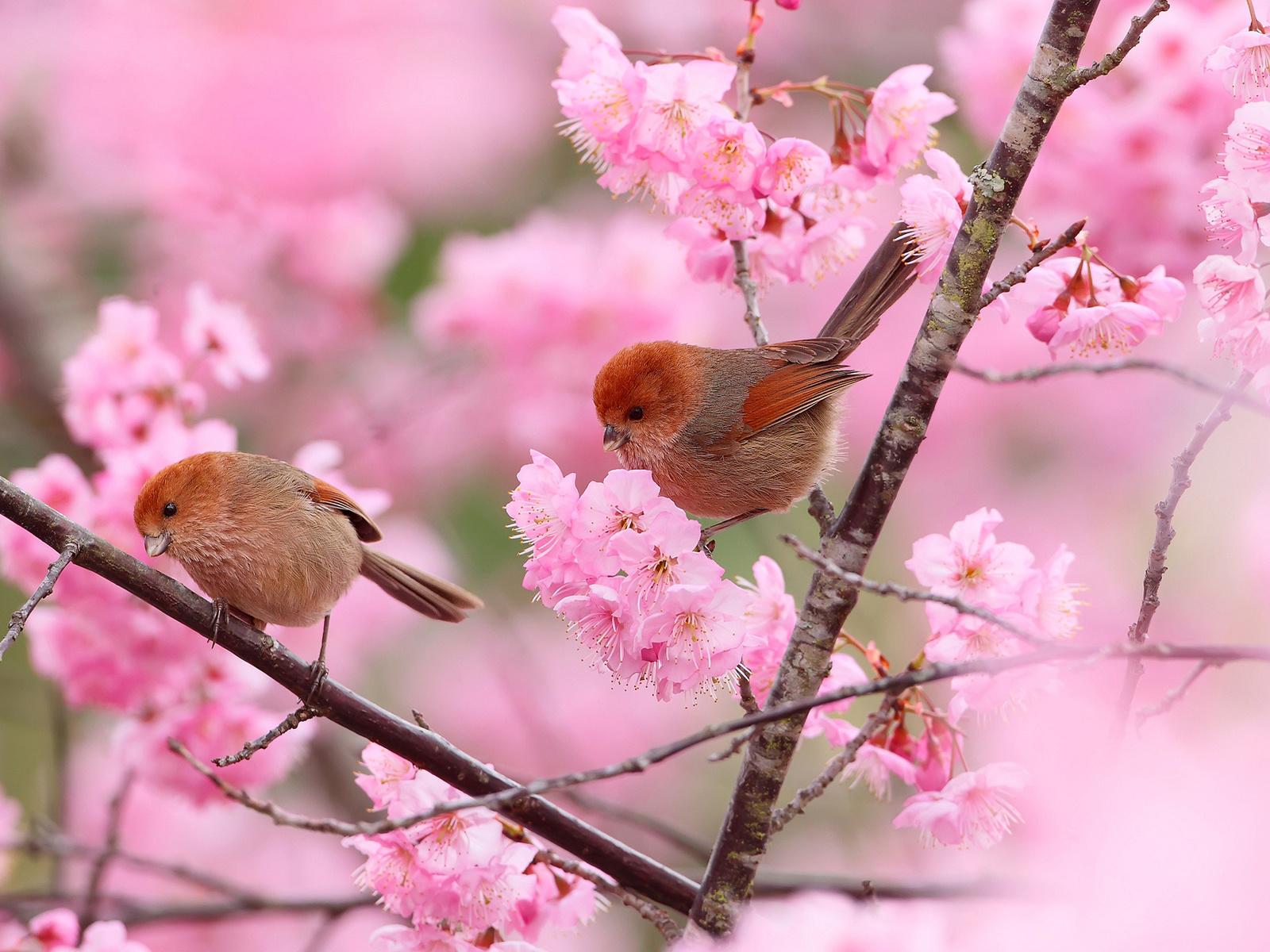 картинки на тему весна смотреть днем