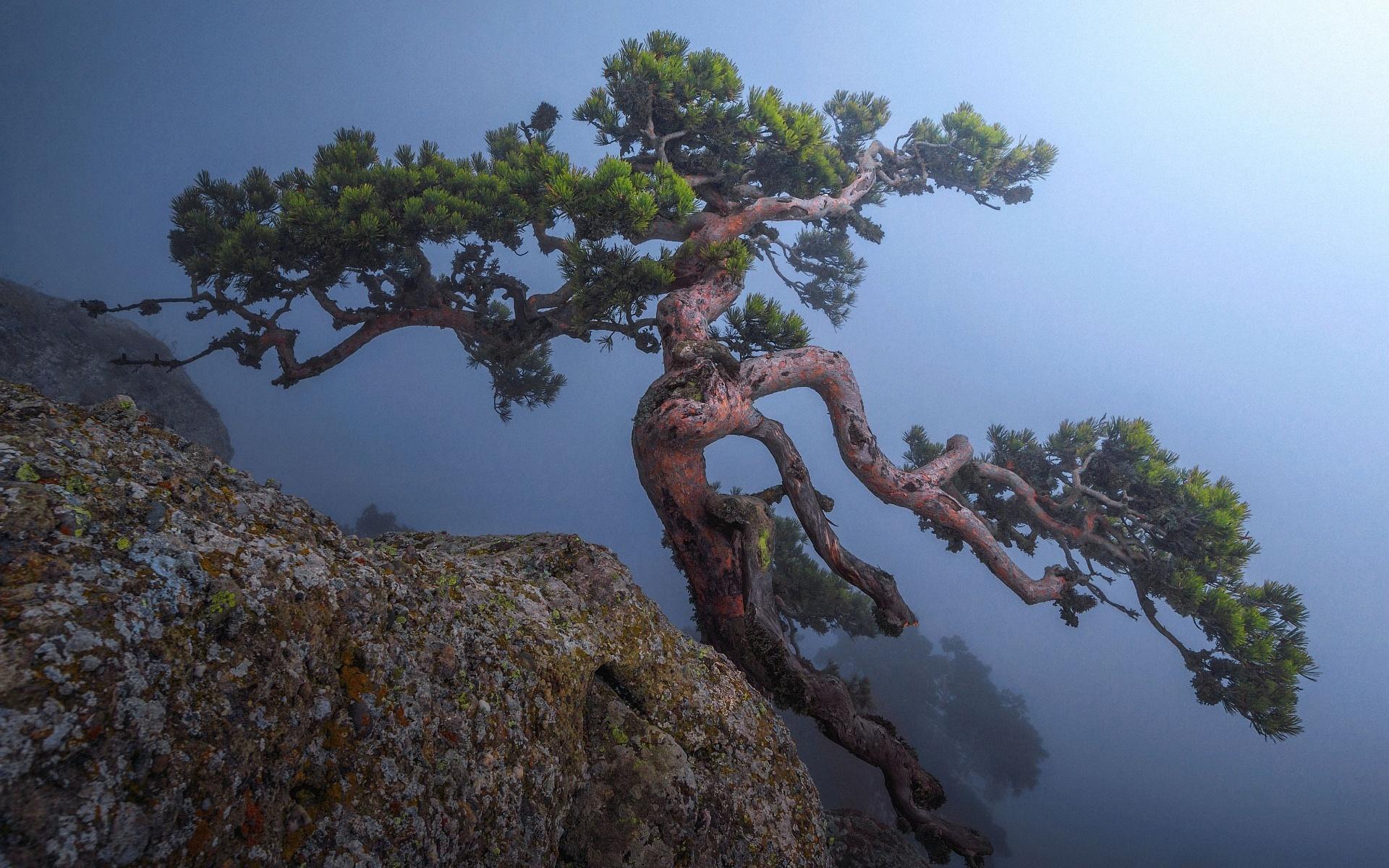 давал, картинка дерево на скале это