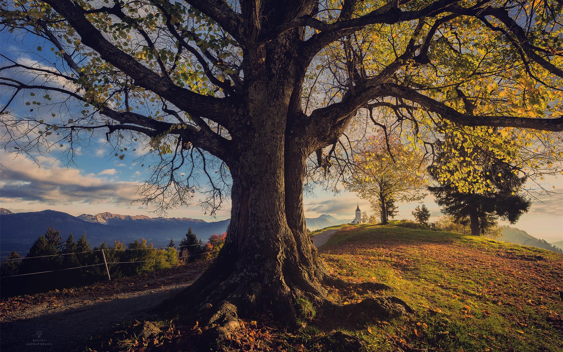 картинки дерево на холме удивились