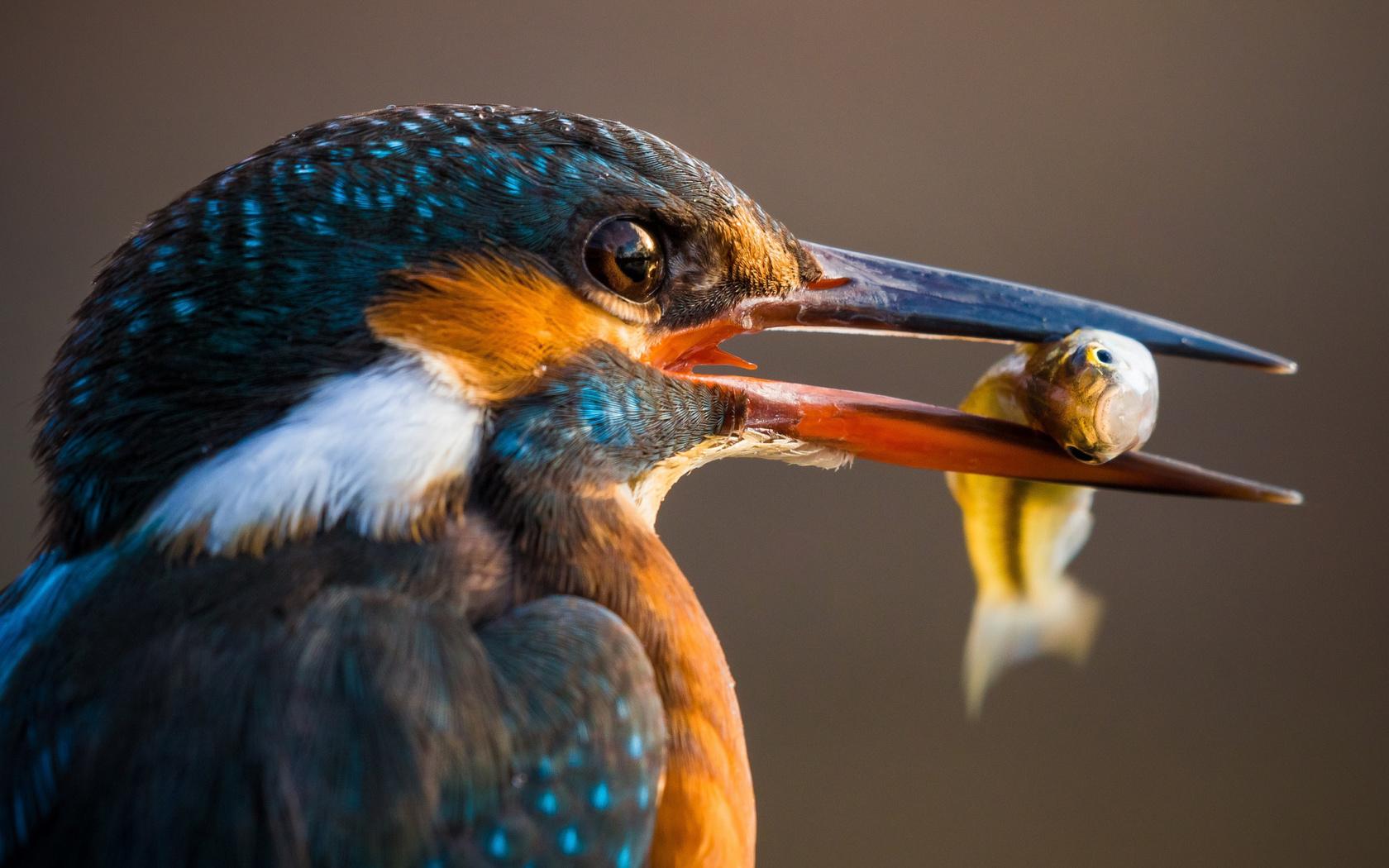 мой мир фото птиц привлекательные голые