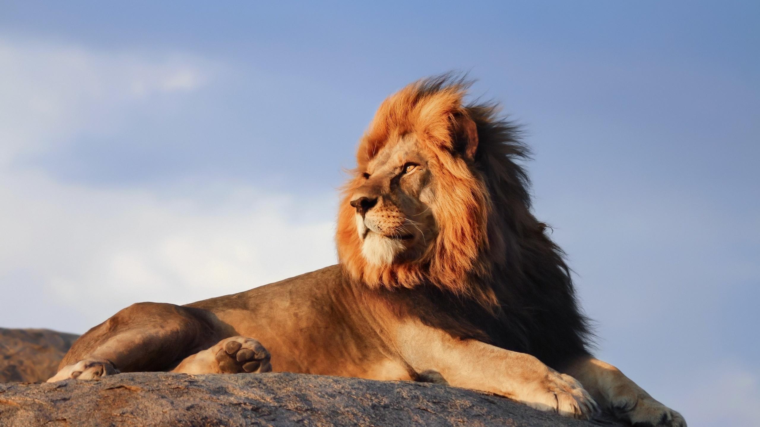 Фото картинки лева
