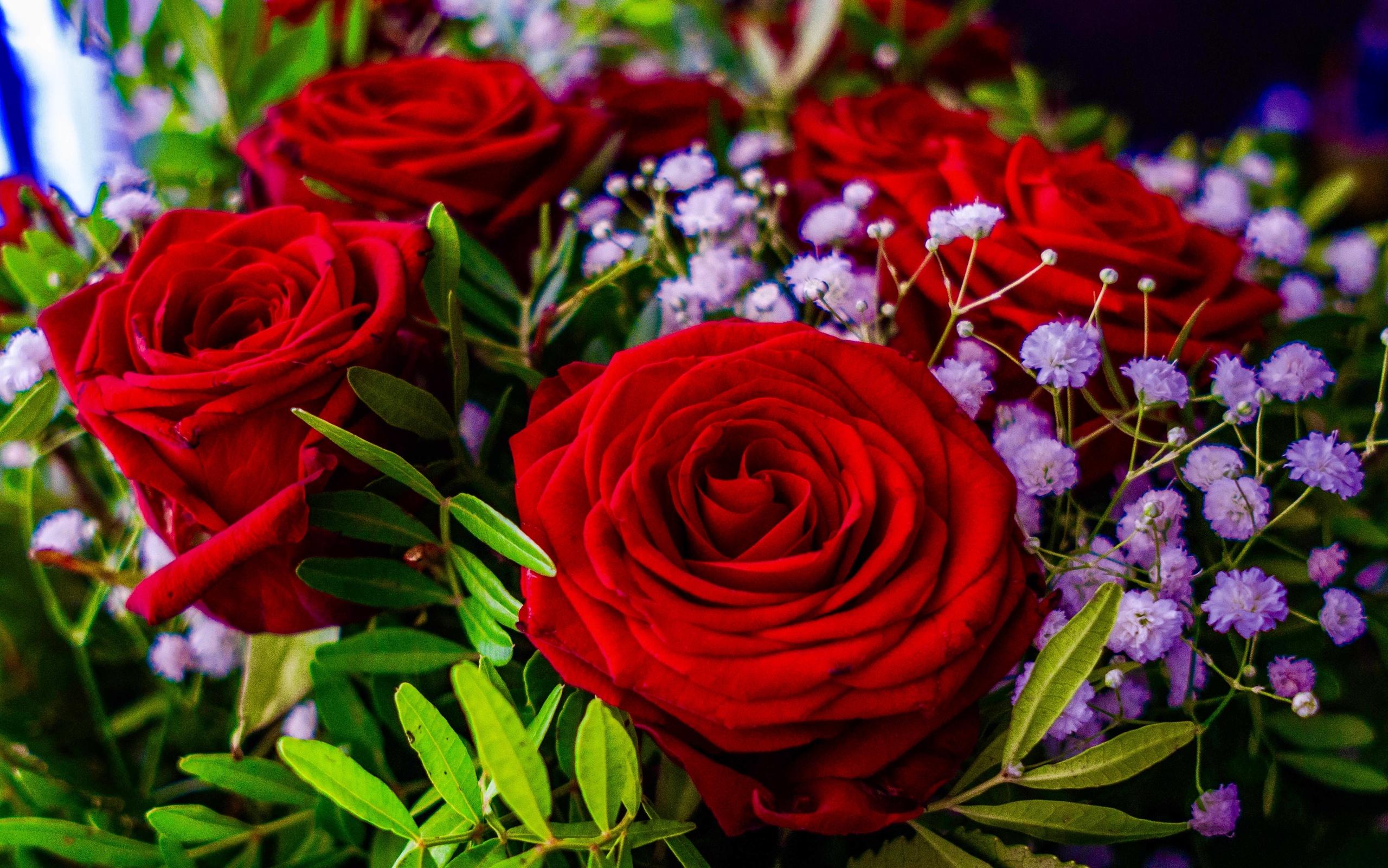 фотографии цветов розы букеты новогодние