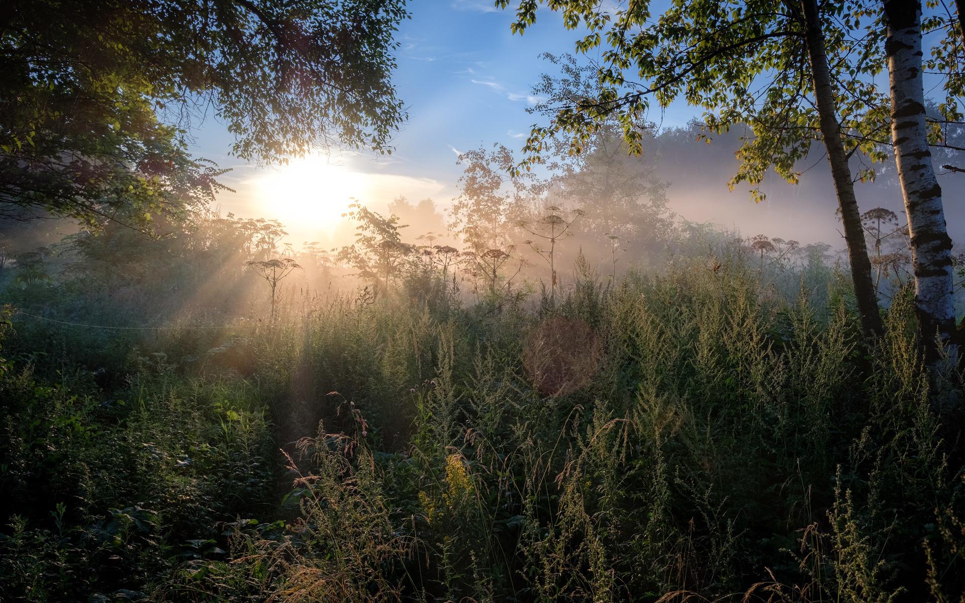 лес летним утром картинки скорее была