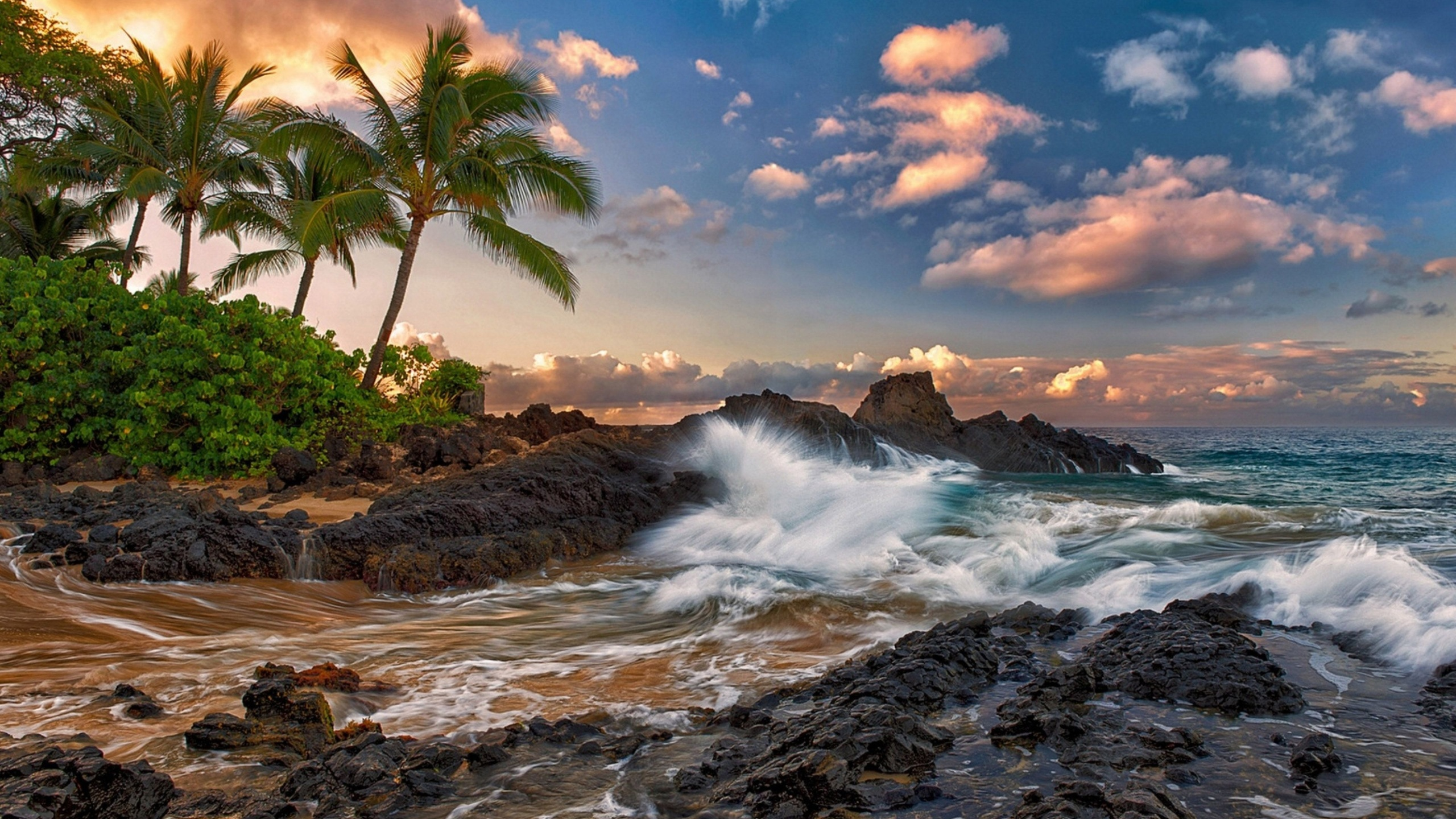 борщ свеклой фото тропических берегов возможность выбрать
