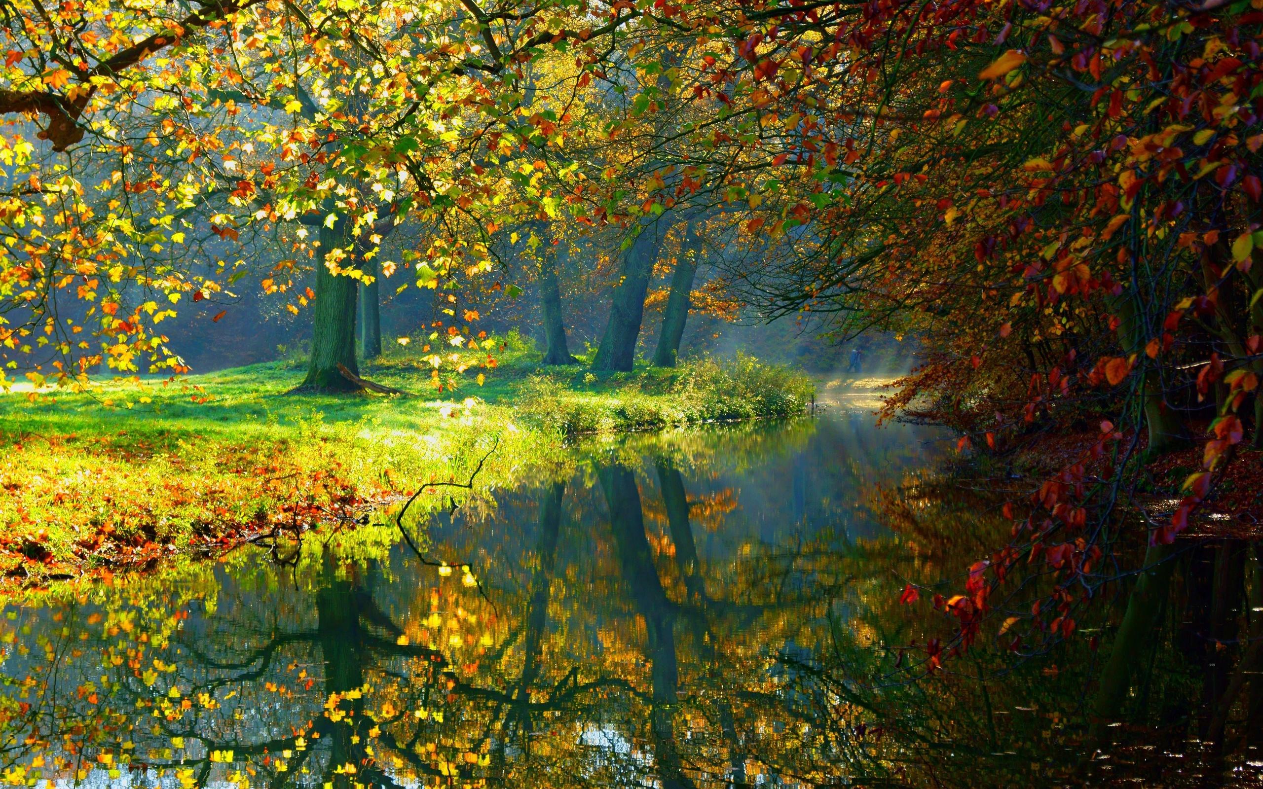 Картинки высокого разрешения осенний лес