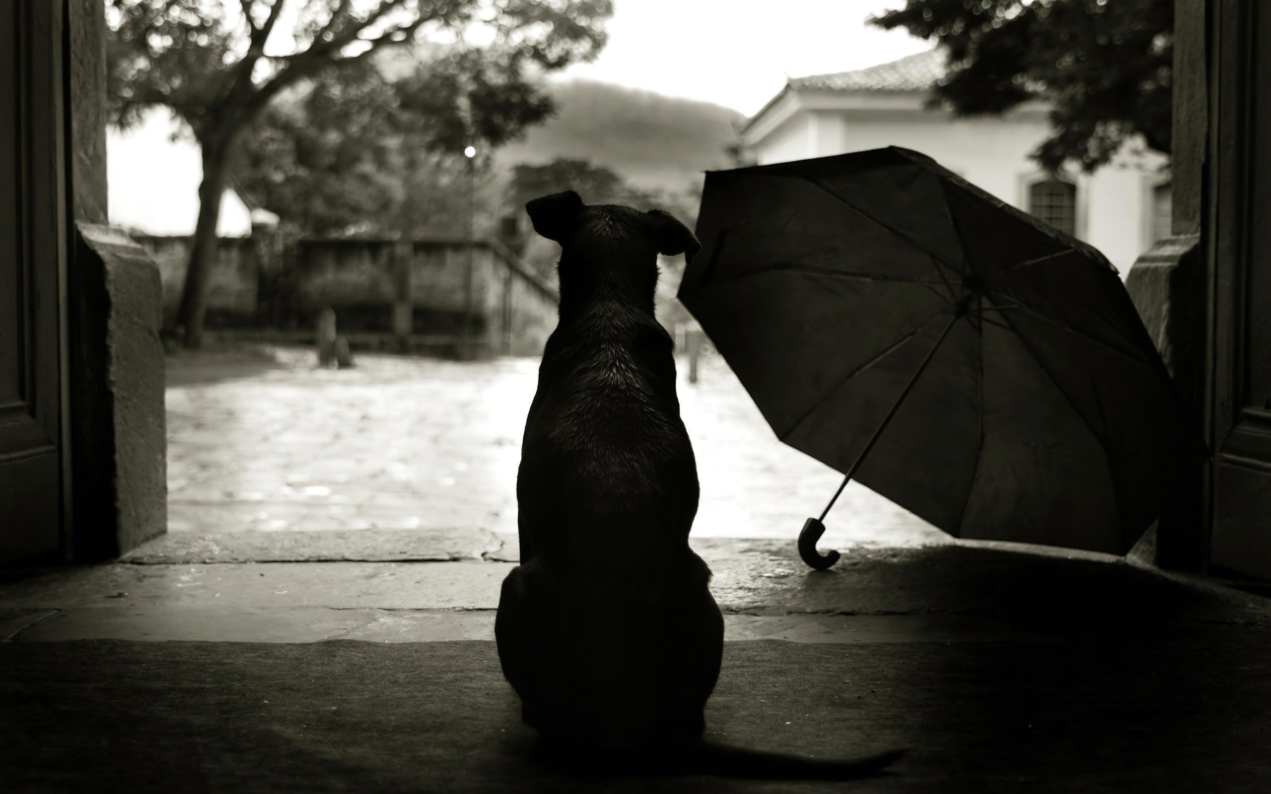 картинки черно белые грусть издревле является